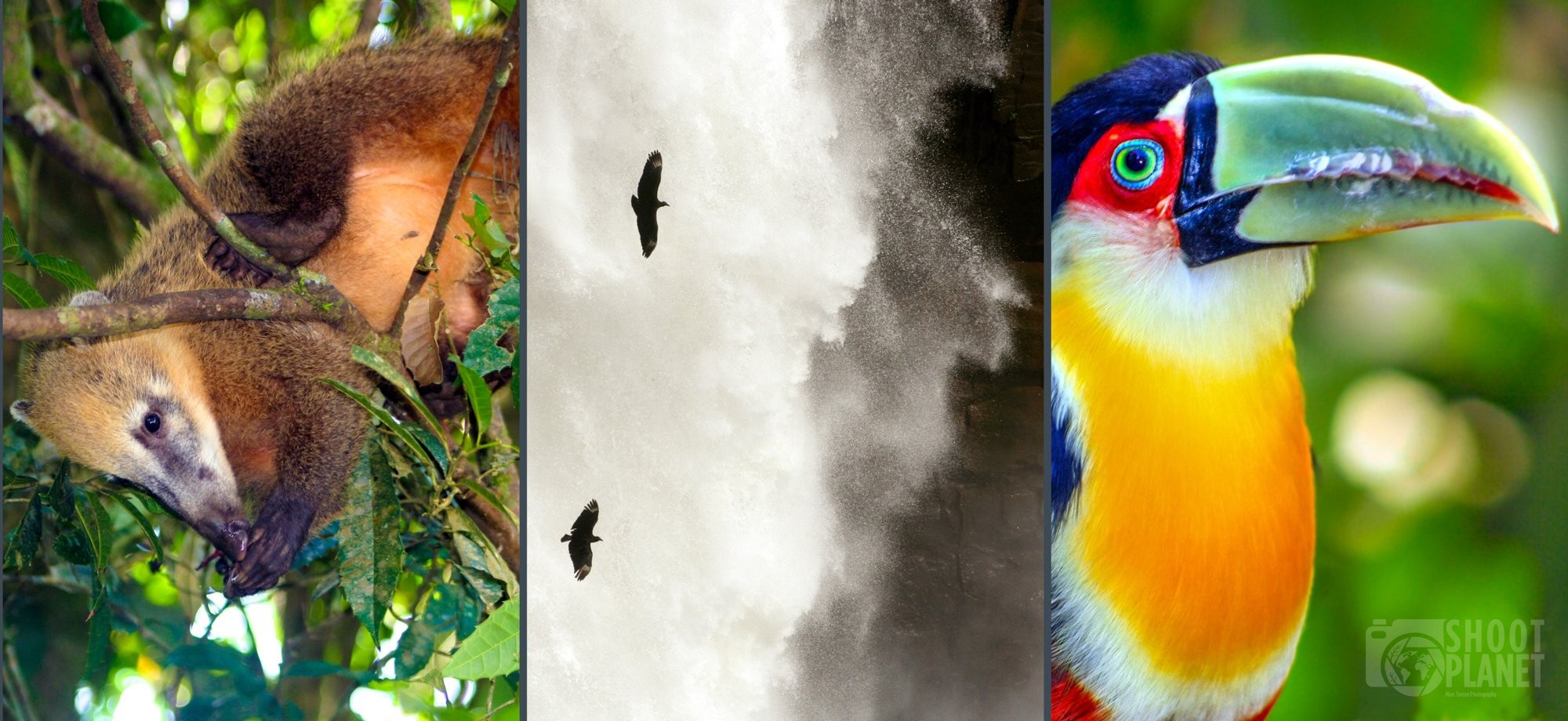 Wildlife of Iguazu Falls, Brazil