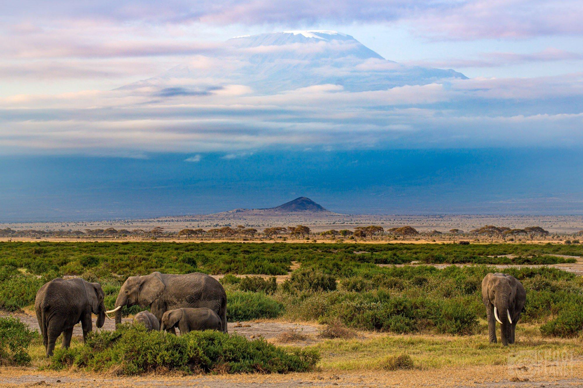 Mount Kilimanjaro and elephants in Amboseli Kenya