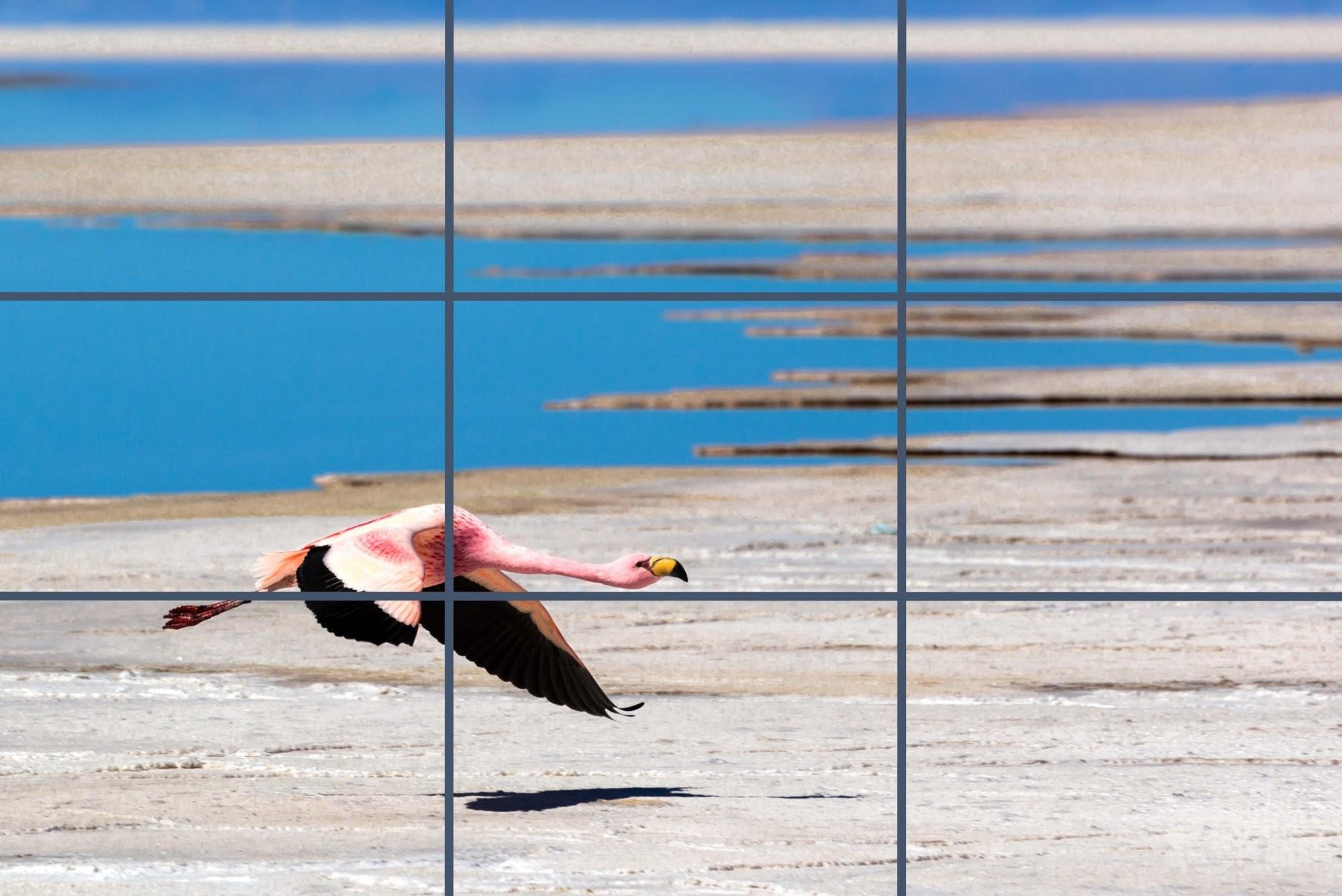Flamingo flying above Uyuni in Bolivia