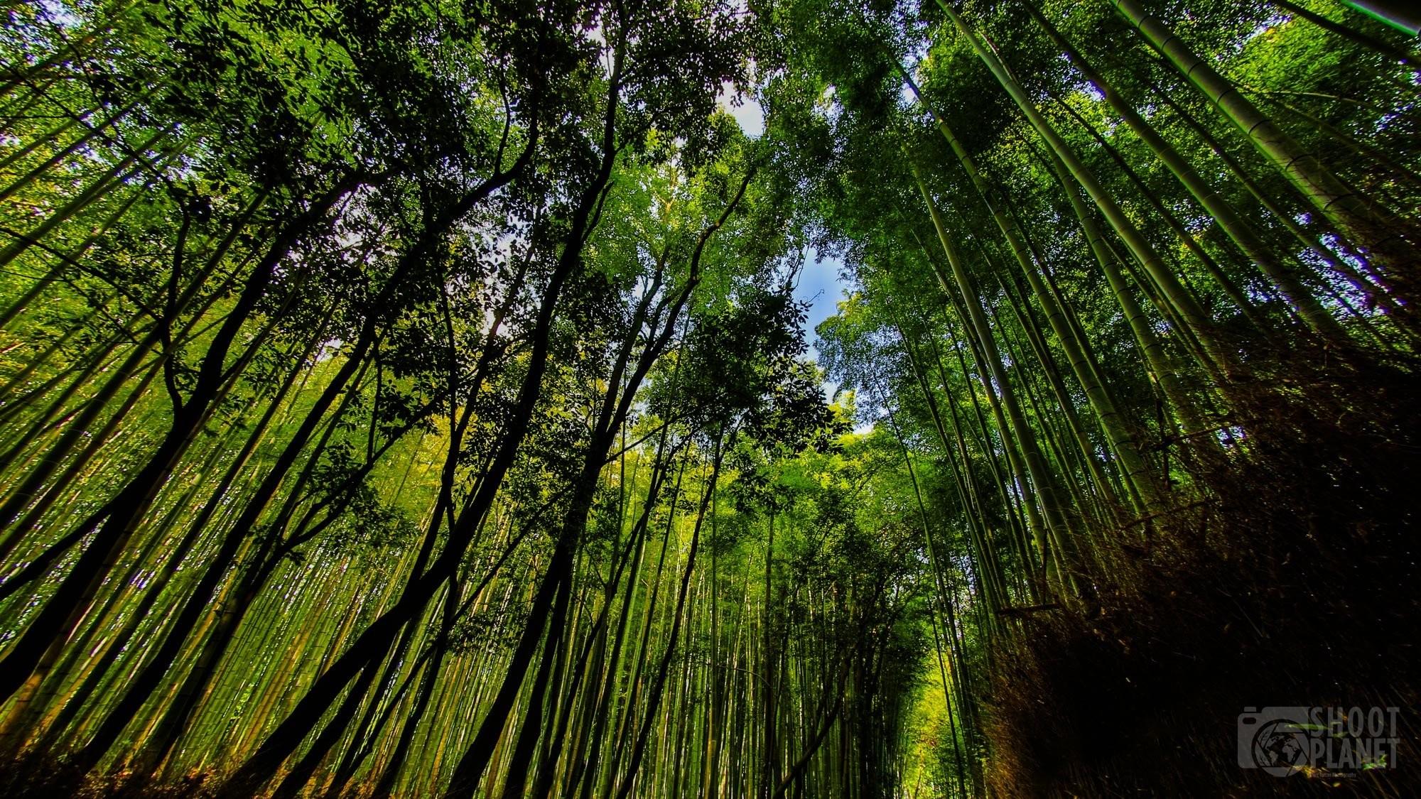 Arashimaya bamboo forest in Kyoto, Japan