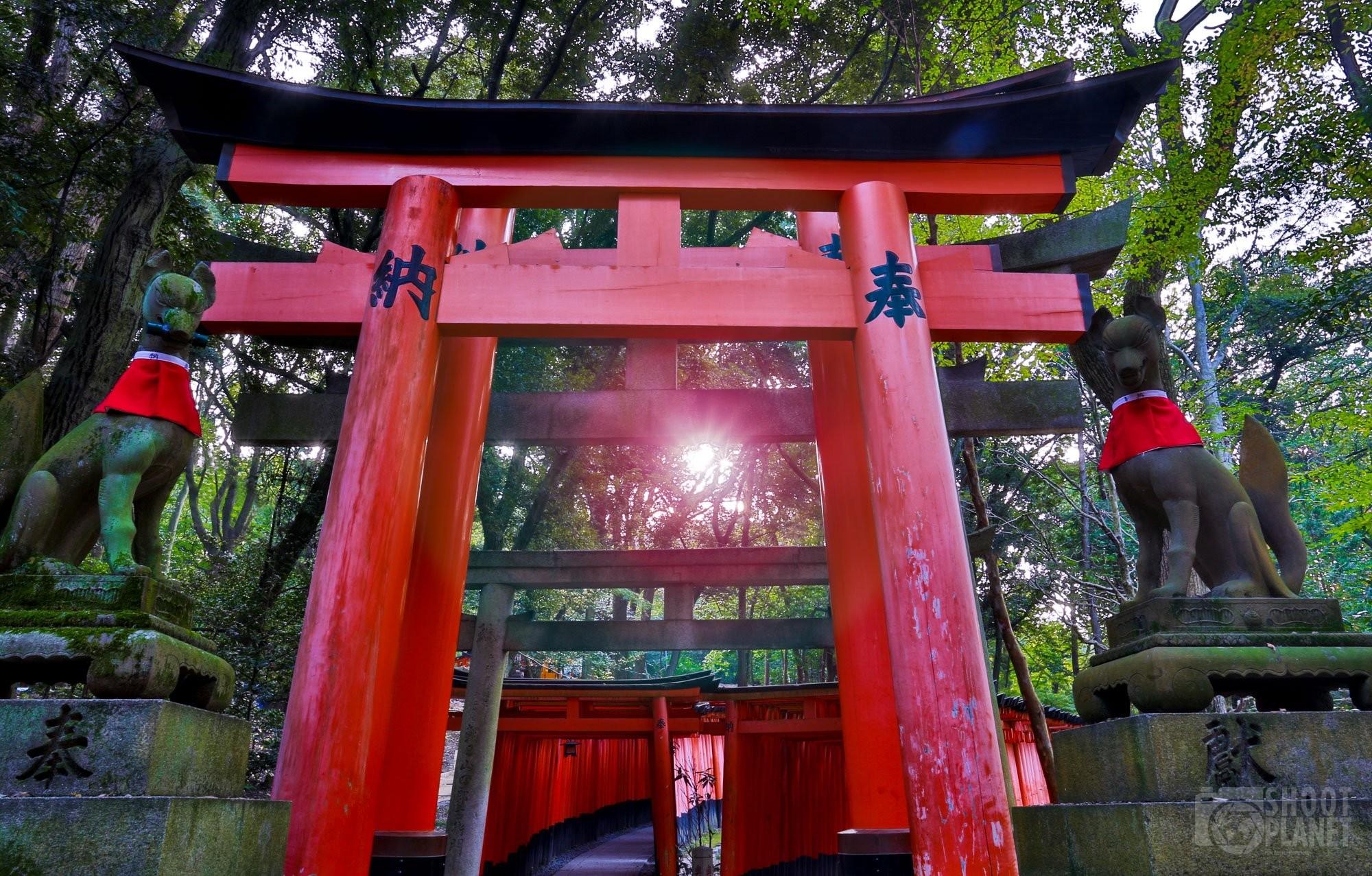 Torii gate sunrays, Fushimi Inari, Kyoto