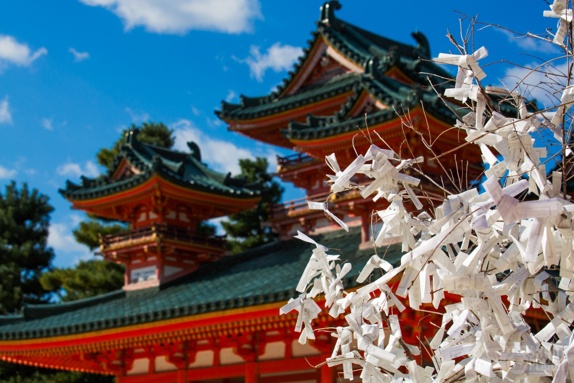 Omikuji tree in Heian Shrine Kyoto
