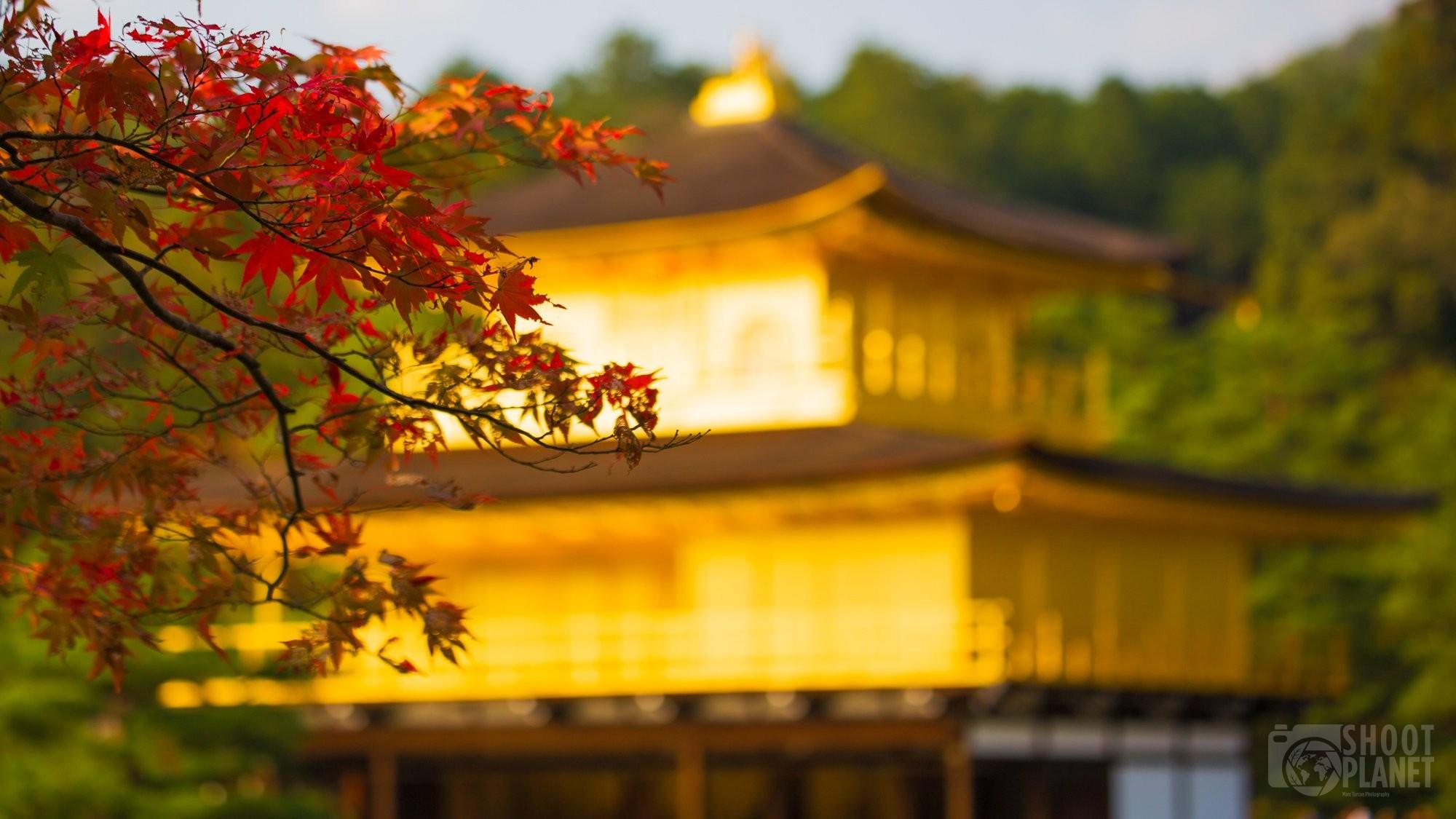 Red leaves and Kinkakuji Golden Pavilion, Kyoto