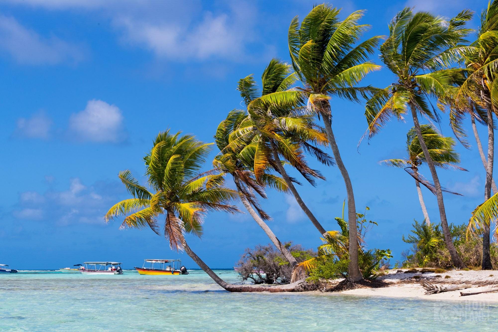 Motu Tereia palm trees on Rangiroa Polynesia