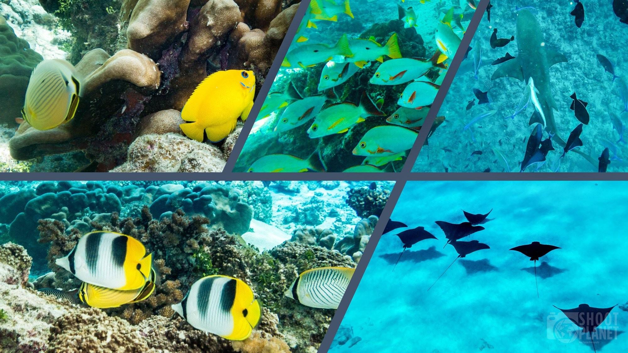 Underwater wildlife of Tuamotus collage in Polynesia