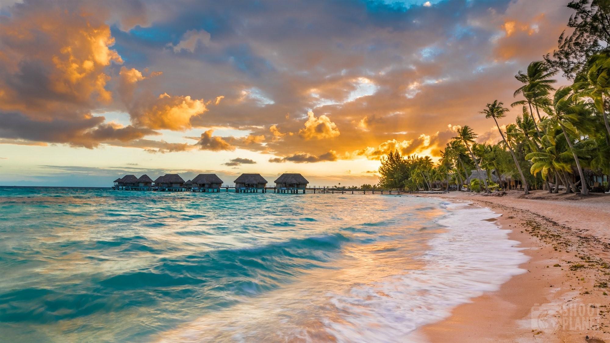 Pink sand and coconut trees sunset Tikehau