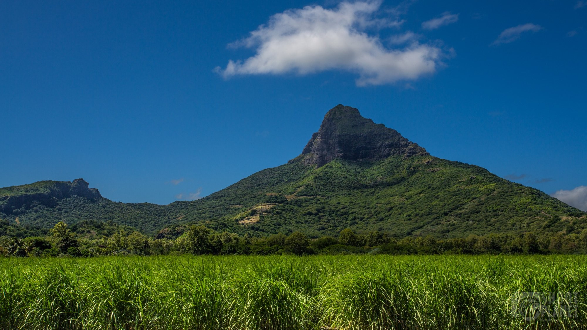 Lion Mountain and sugar cane field, Mauritius