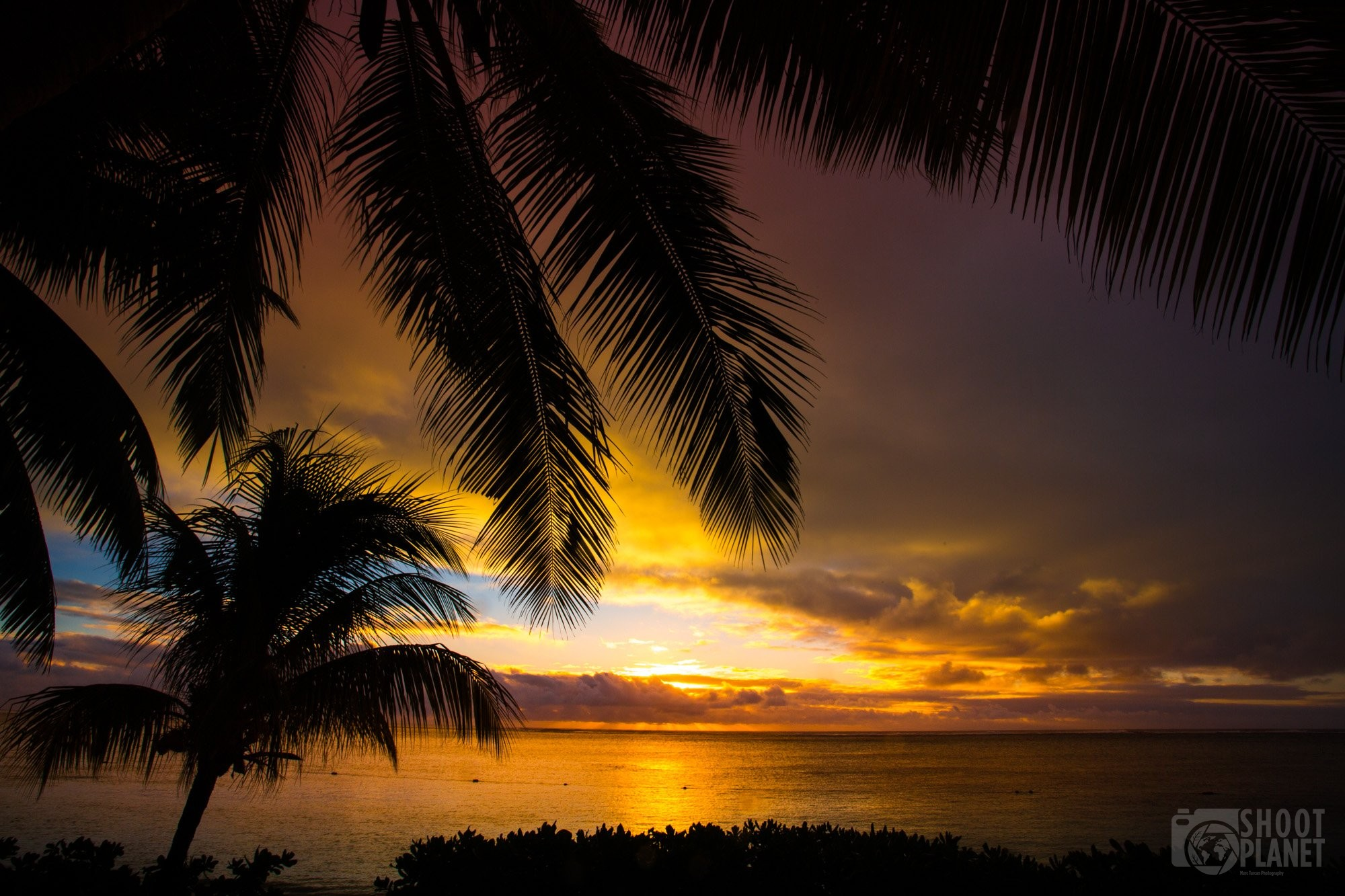palm tree sunset over the ocean, Mauritius