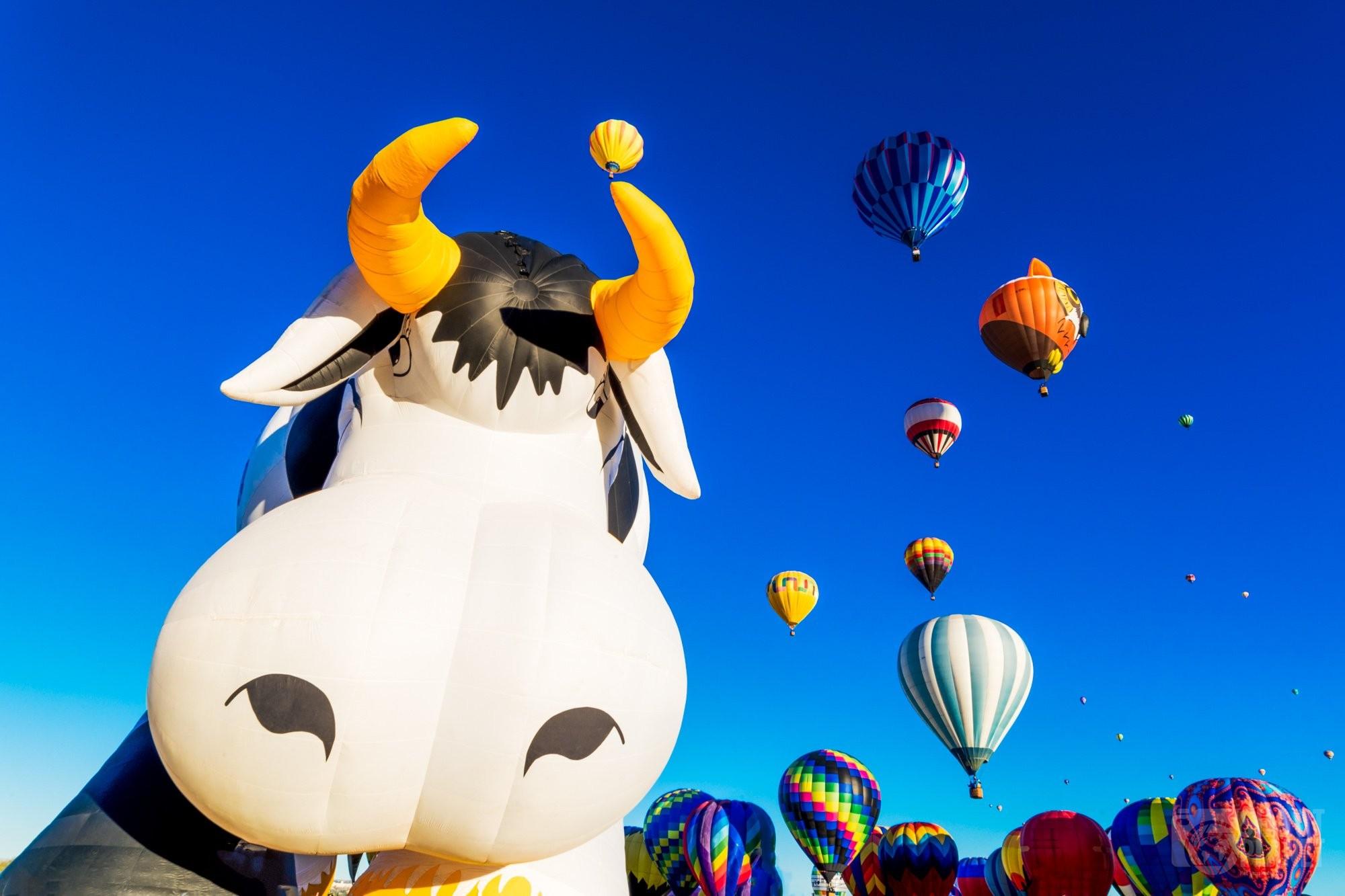 Funny cow balloon in Albuquerque, USA