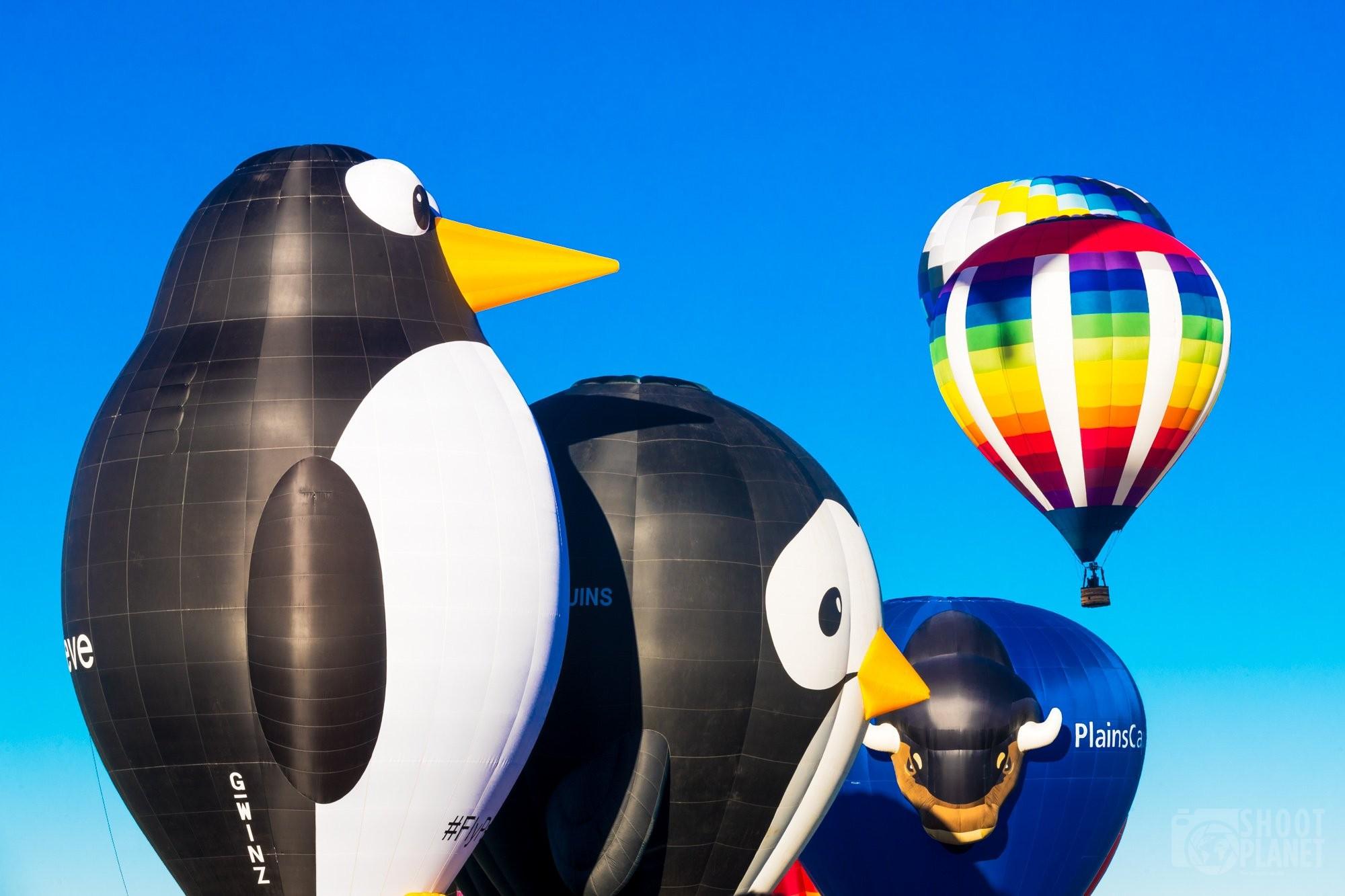 Huge penguin balloons in Albuquerque USA
