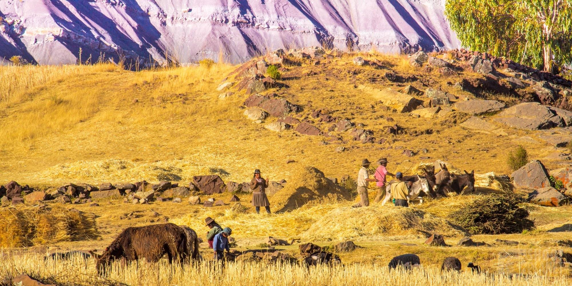 Jalq'a farmers cultivating their fields, Maragua, Bolivia