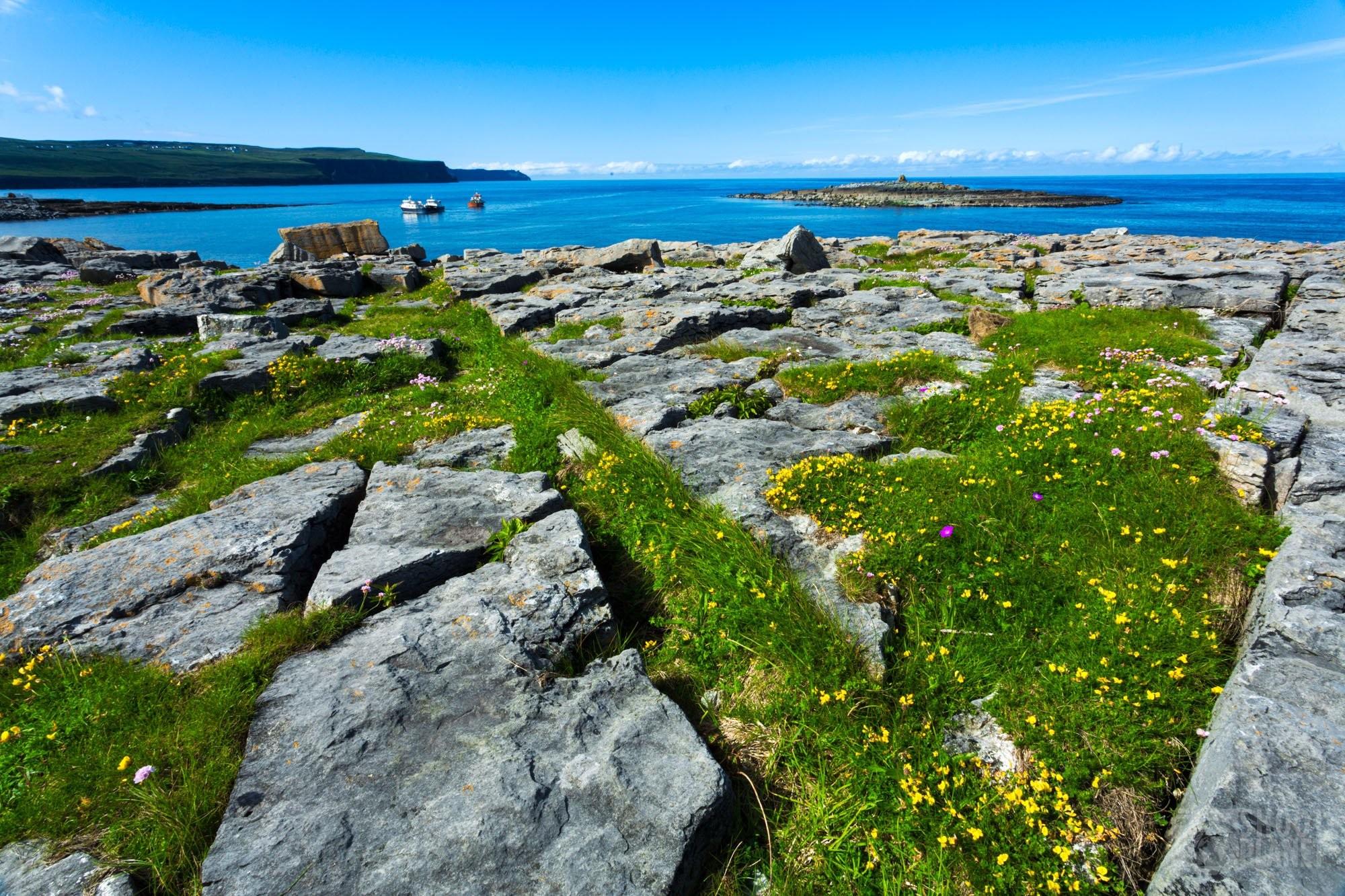 Cliffs of Moher wildflowers rocks, Ireland