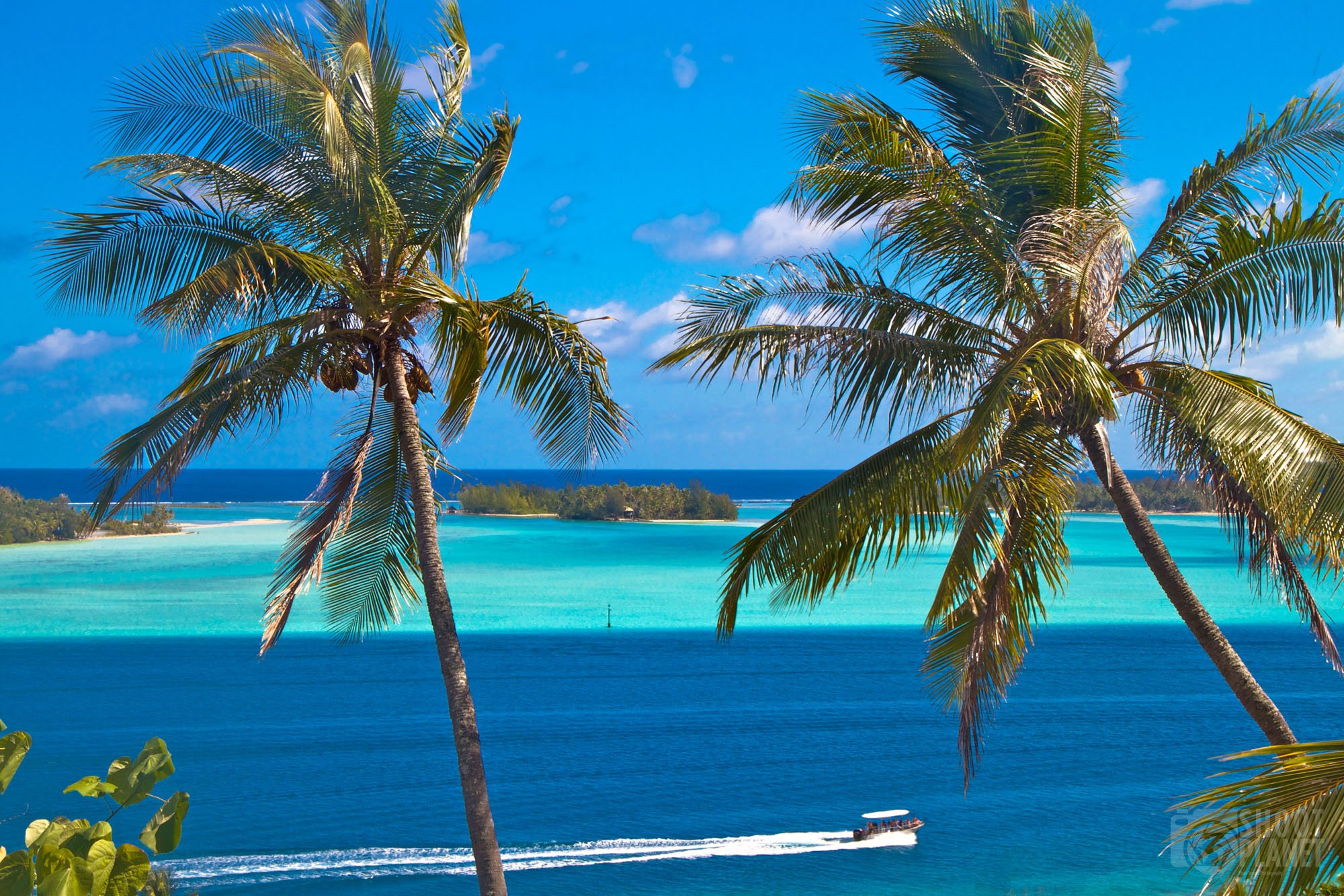 Palm trees and turquoise waters, Bora Bora
