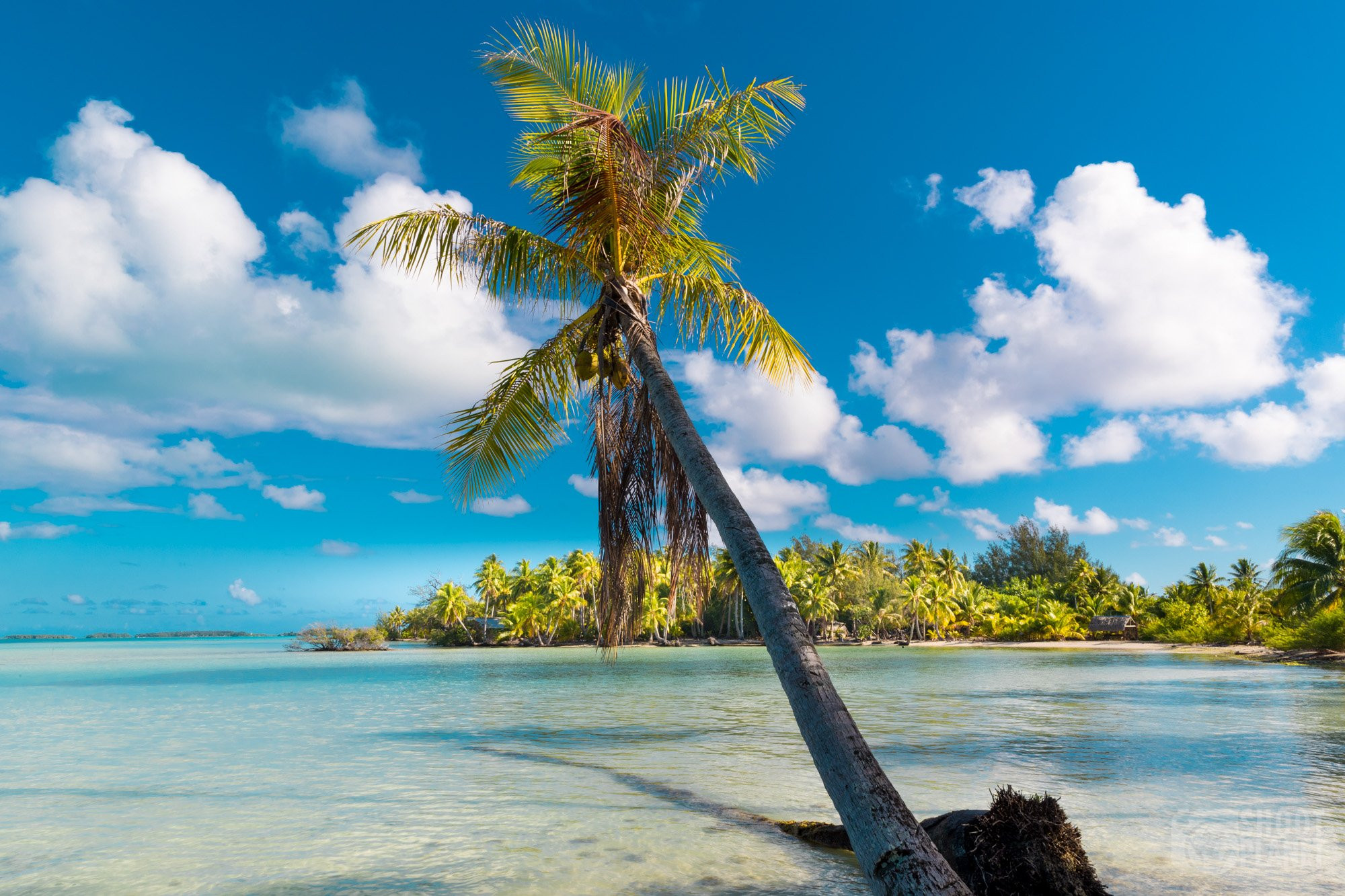 Palm tree over the BoraBora lagoon