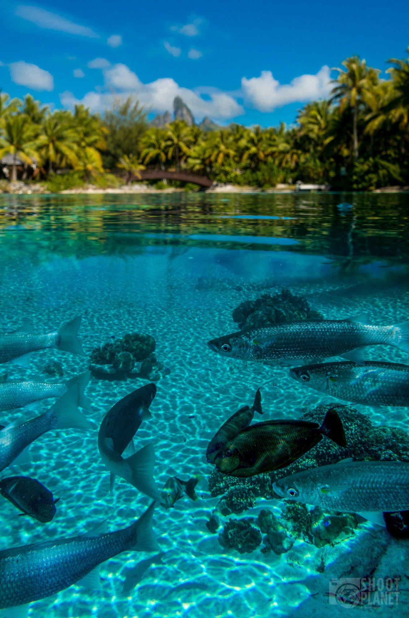 Under and above water lagoon, Bora-Bora