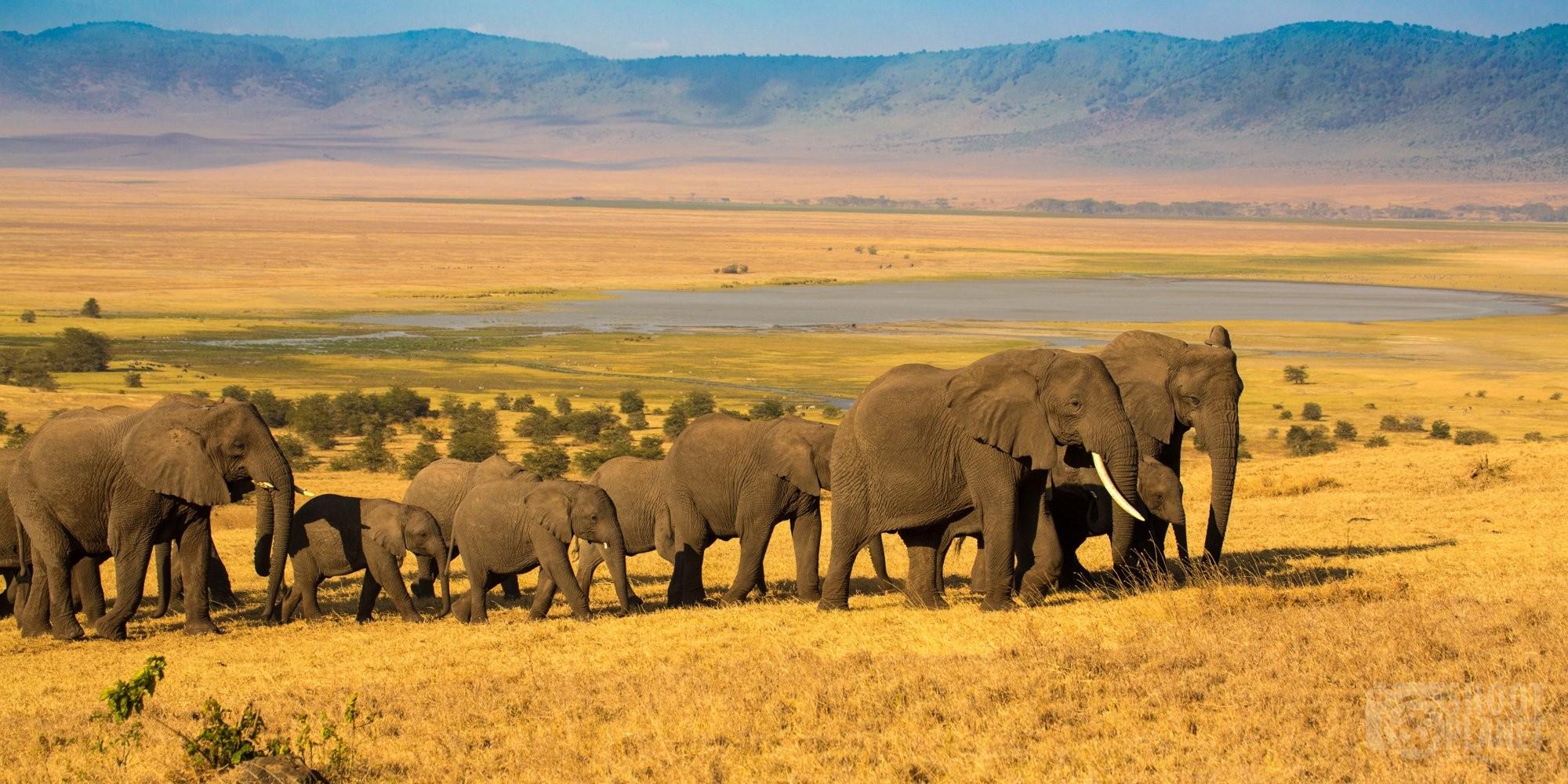 Elephant herd at sunset in Ngorongoro, Tanzania