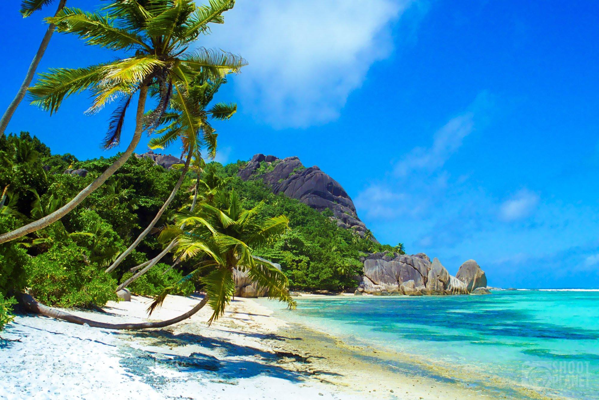 Coconut trees beach, La Digue Island Seychelles