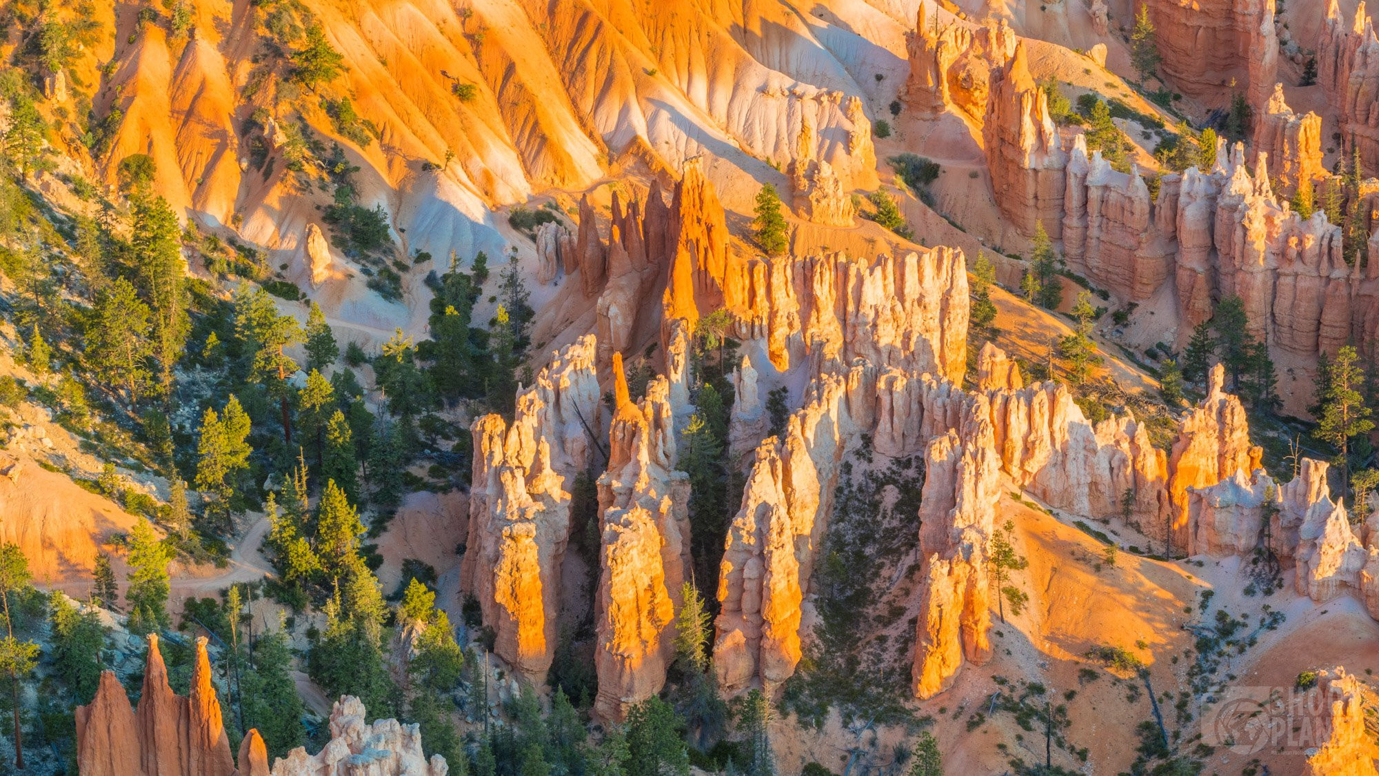 Bryce Canyon National Park rock forest, USA