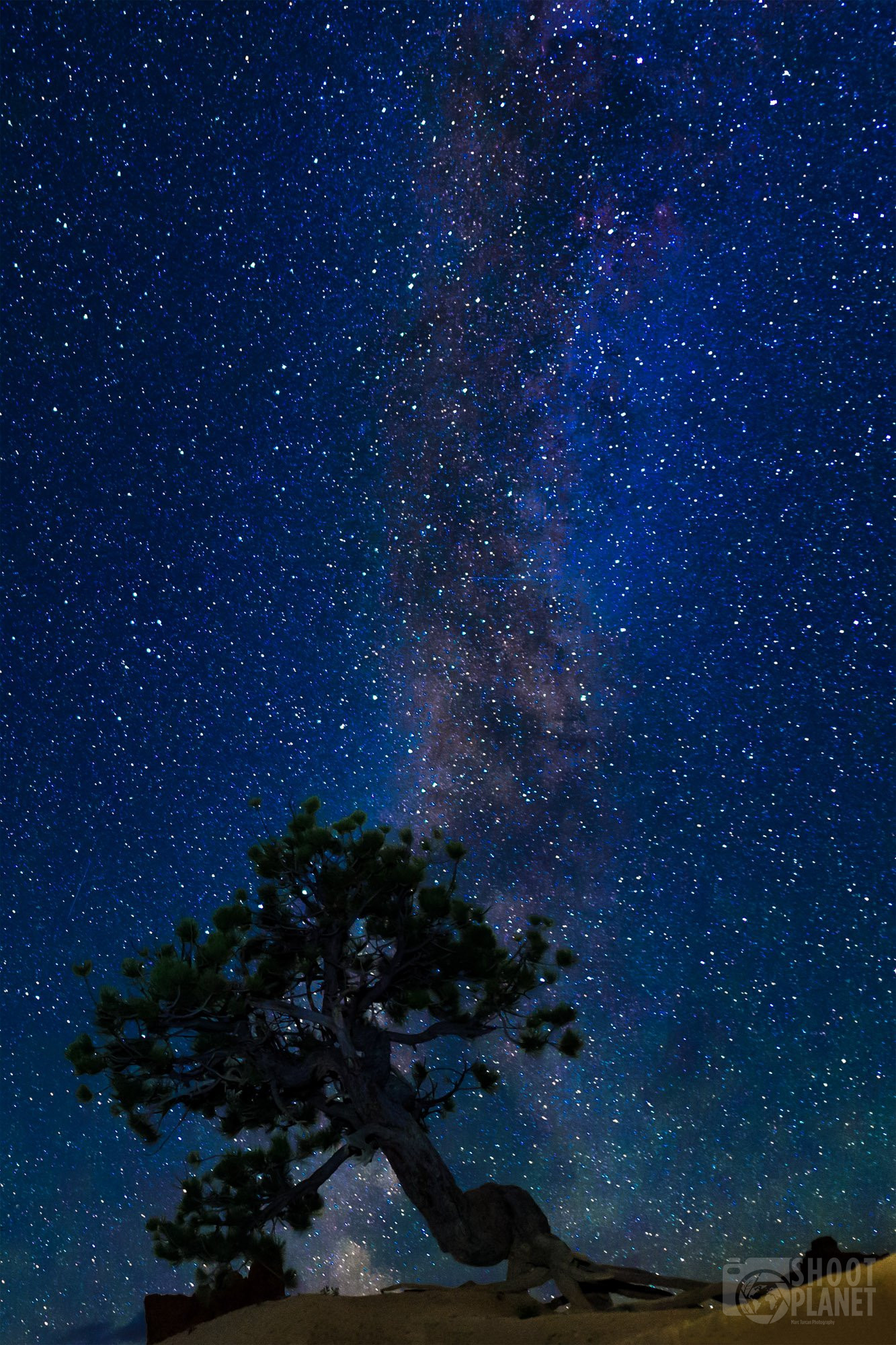 Bryce Canyon Milky Way and tree, USA