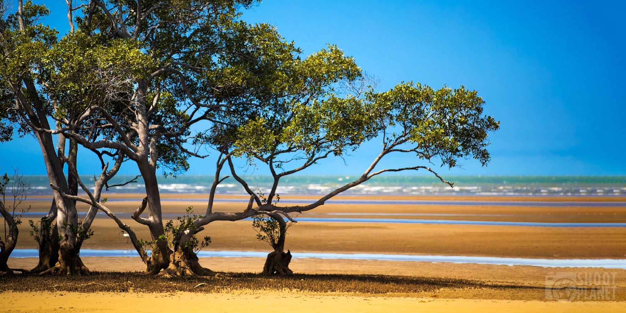 Mangrove trees on the beach, Brisbane, Australia