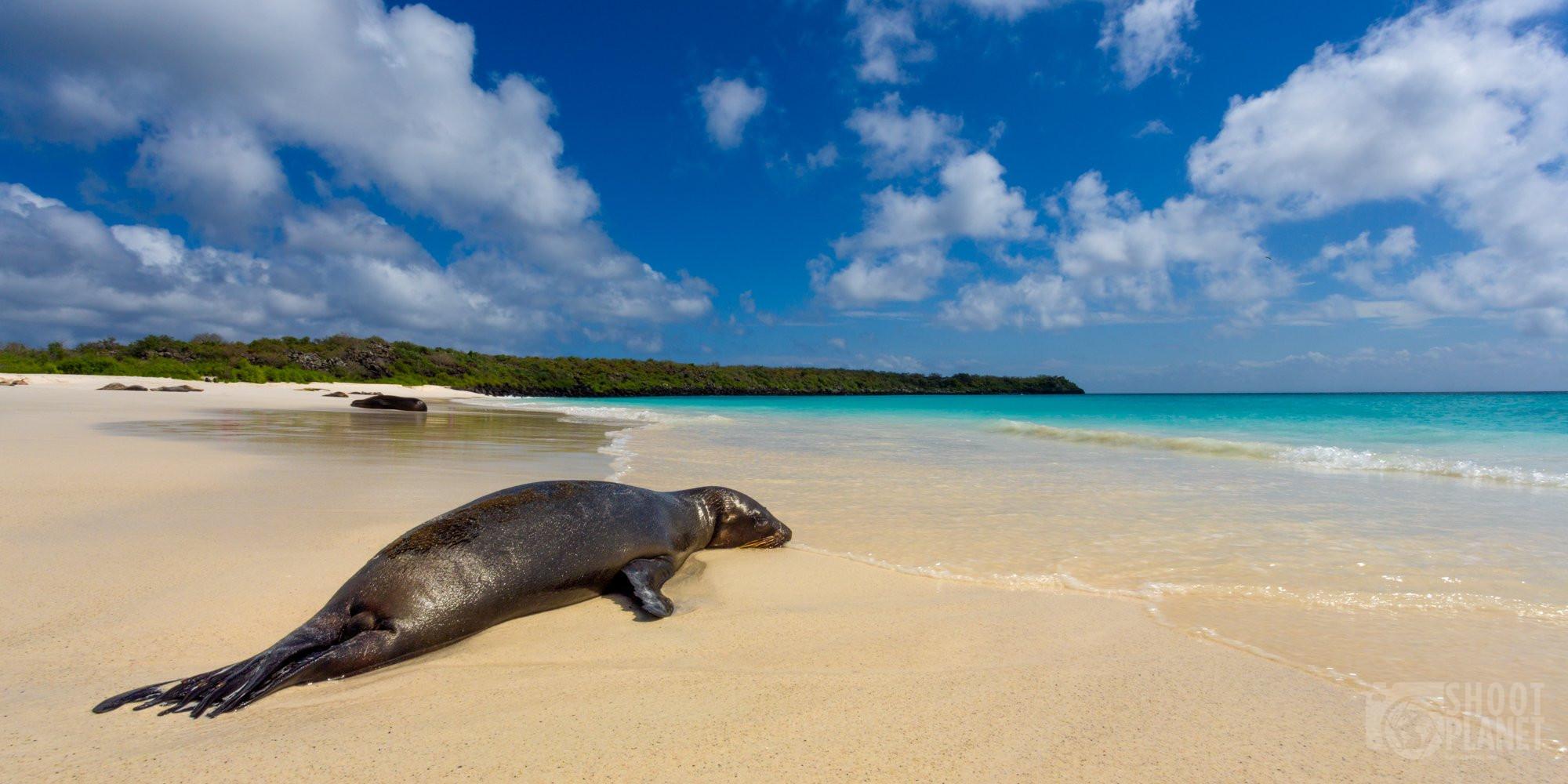 Loin seal sunbath, Espanola Island, Galapagos