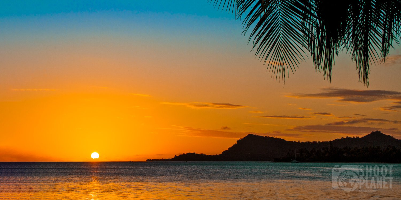 Bora Bora island palm tree leaf sunset