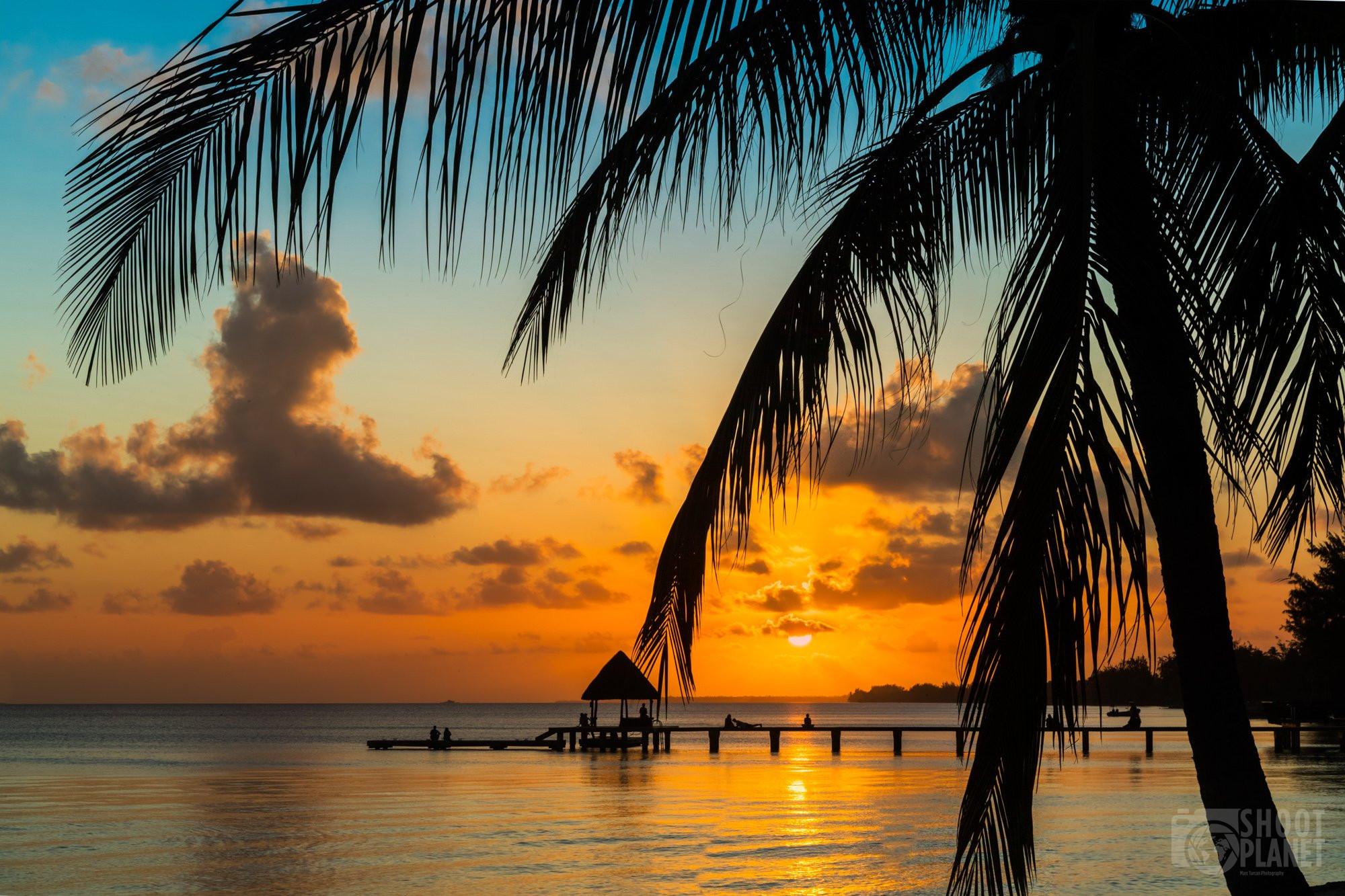 Sunset palm tree silhouettes, Rangiroa, Polynesia
