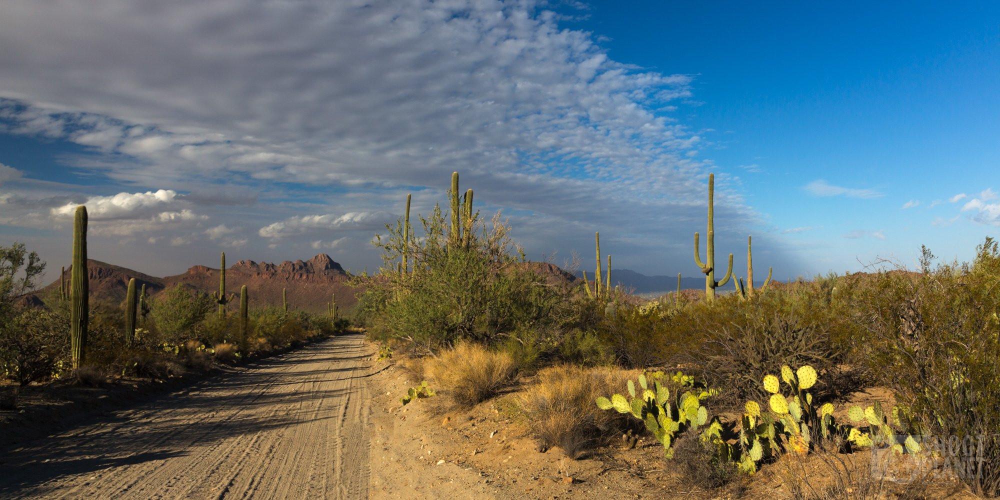 Dirt road cactus sunset light, Saguaro Arizona