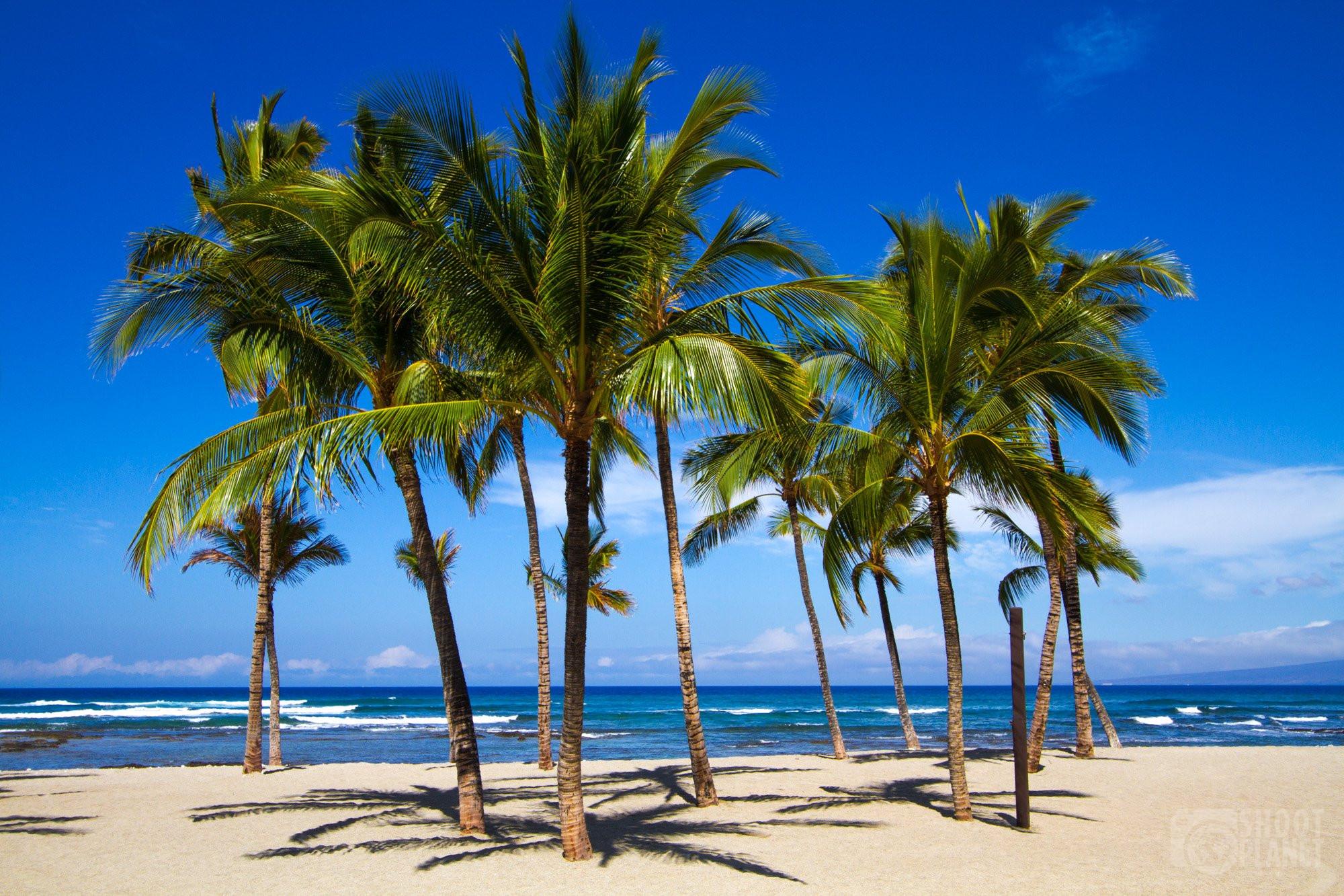 white sand beach and palm trees, Hawaii