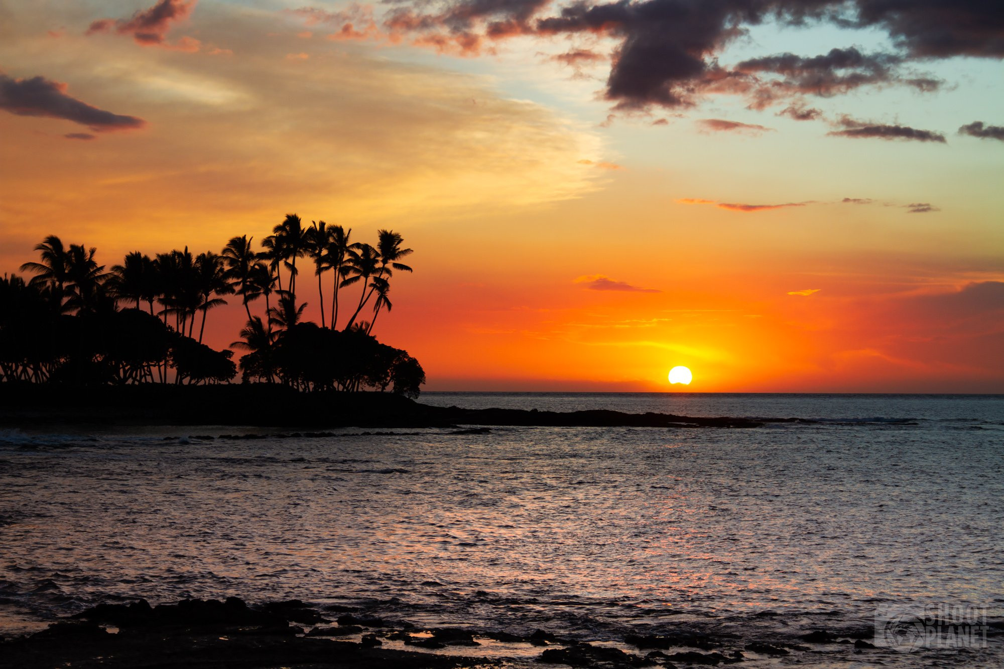 Palm trees sunset, in Hawaii Big Island