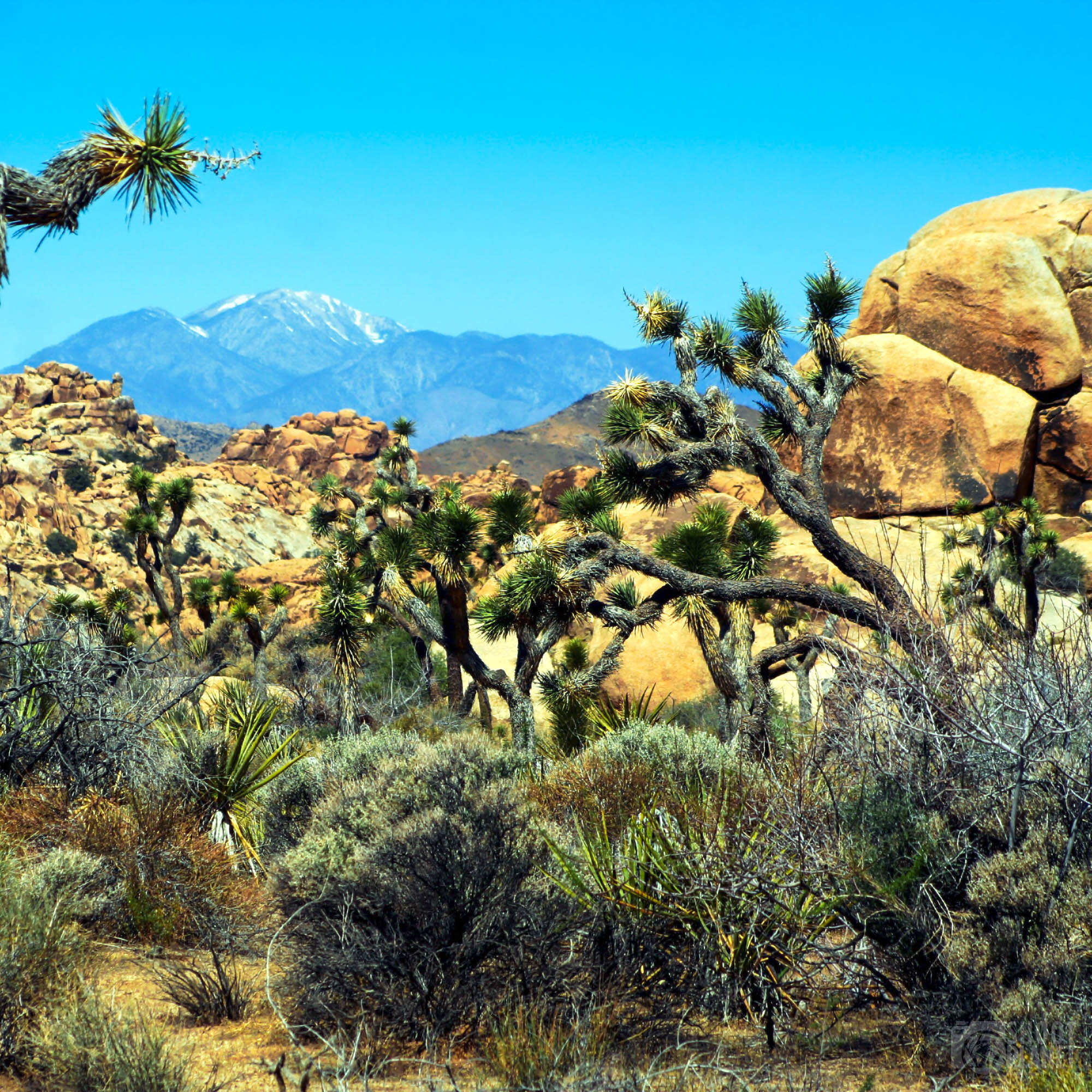 Boulders landscape in Joshua Tree Park, California