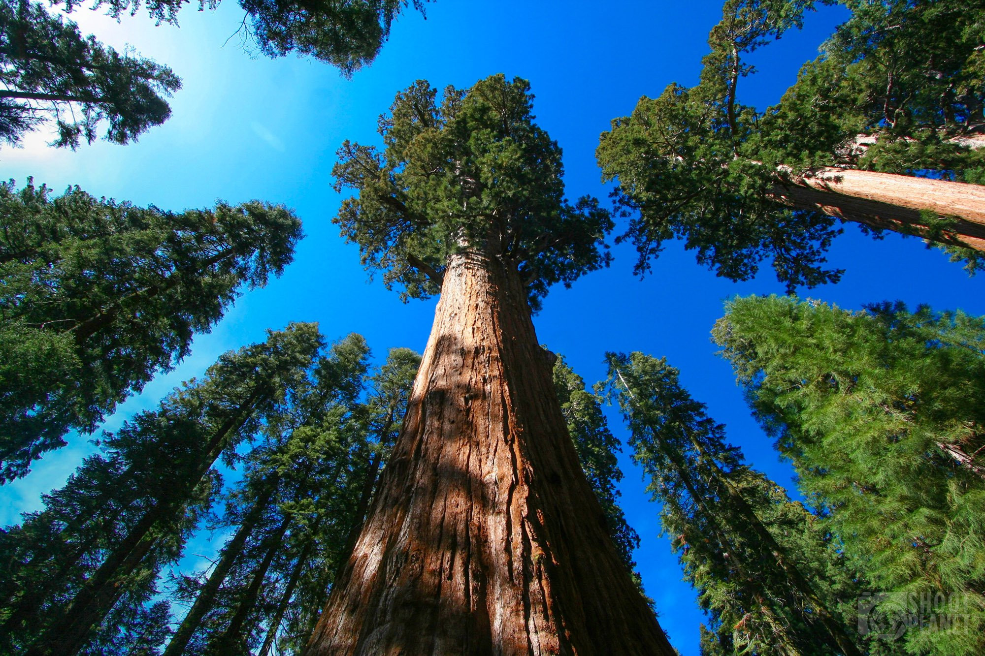 Sequoia National Park Giant forest, California USA