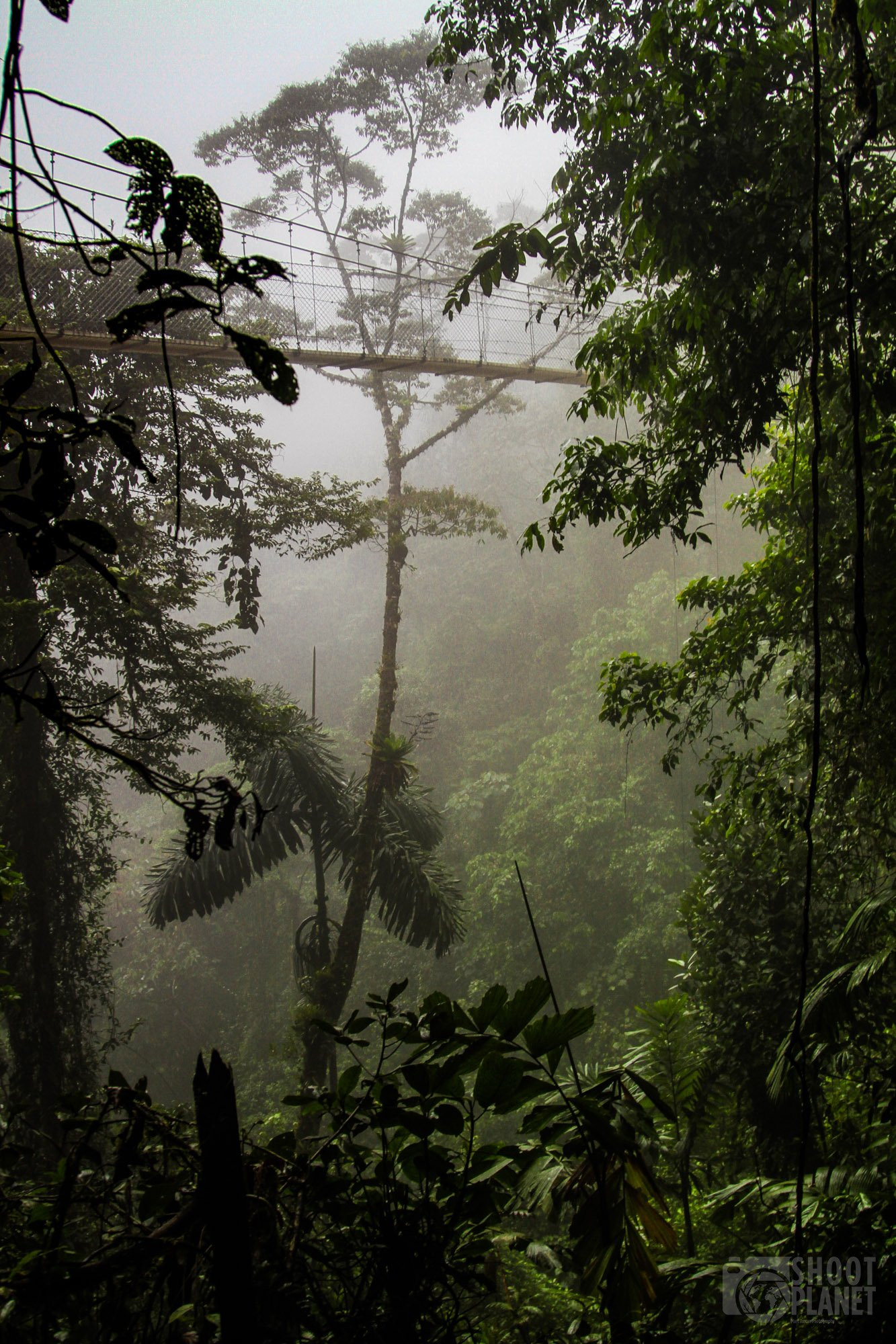 Rainforest canopy hanging bridge, Costa Rica