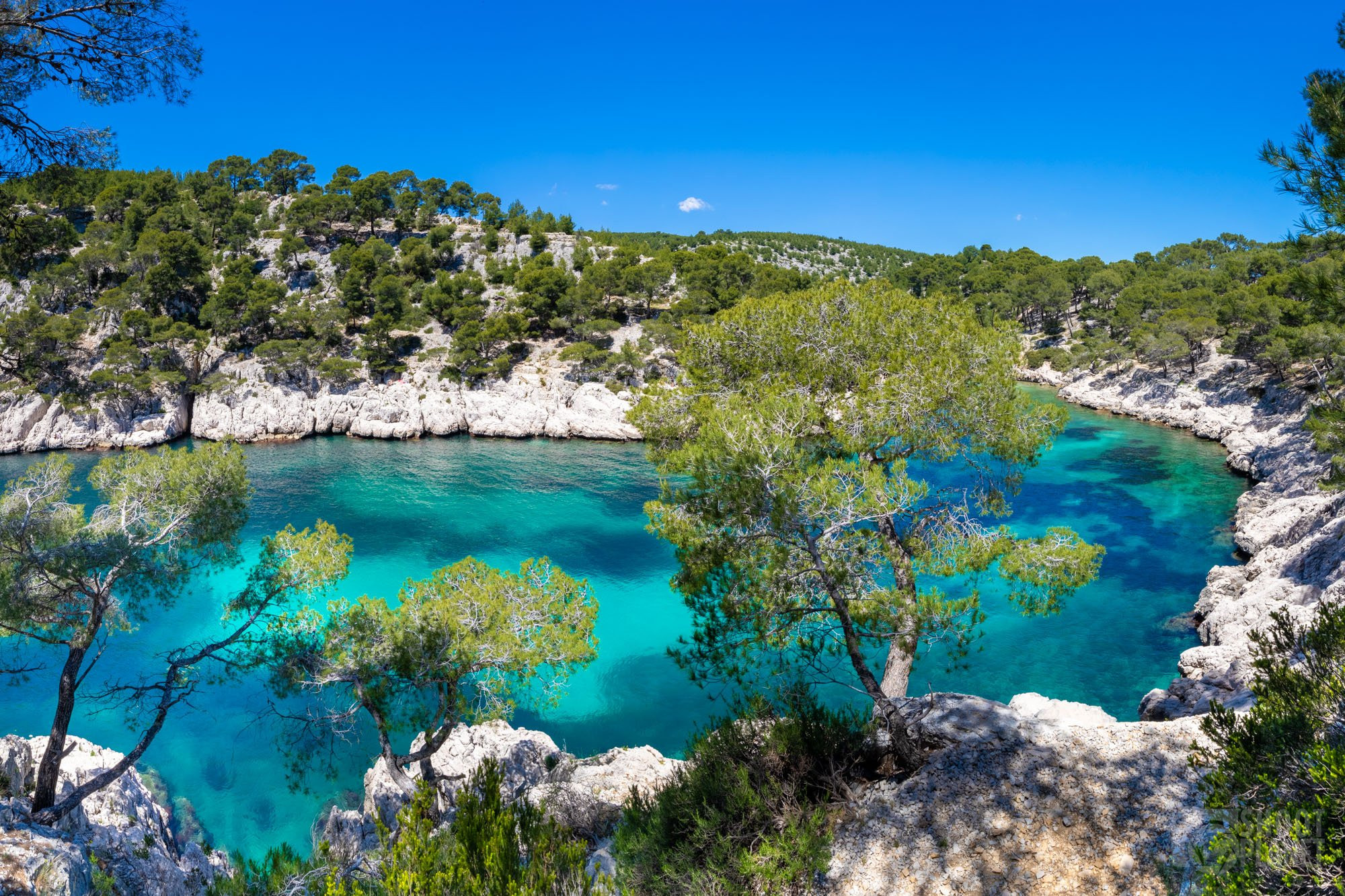 Port-Pin Calanque forest, Azure coast France