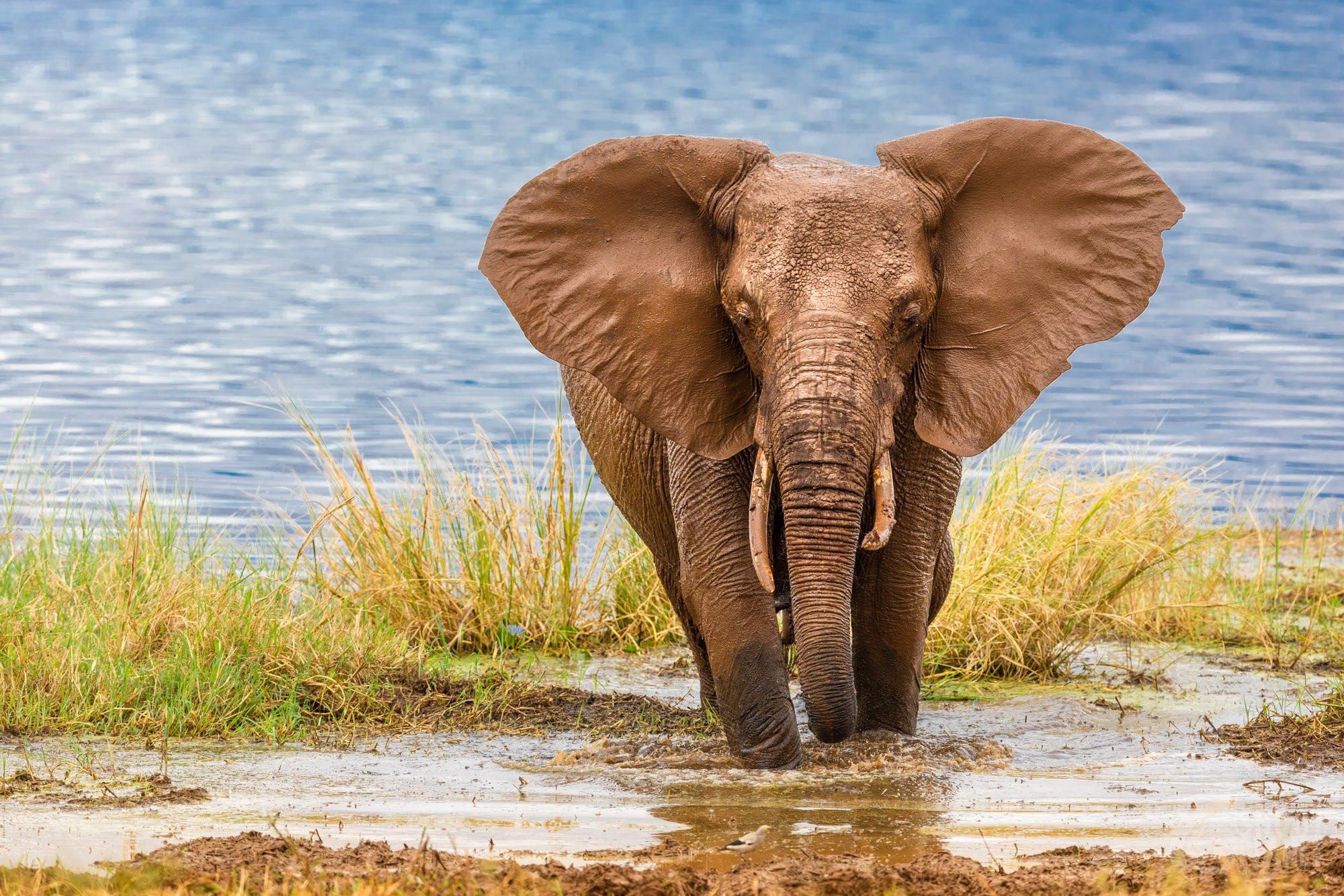 Beautiful elephant in Tarangire National Park, Tanzania