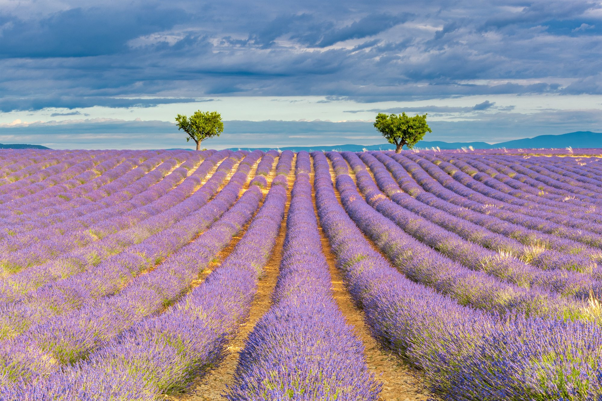 Valensole lavender field cloudy sunrise, France