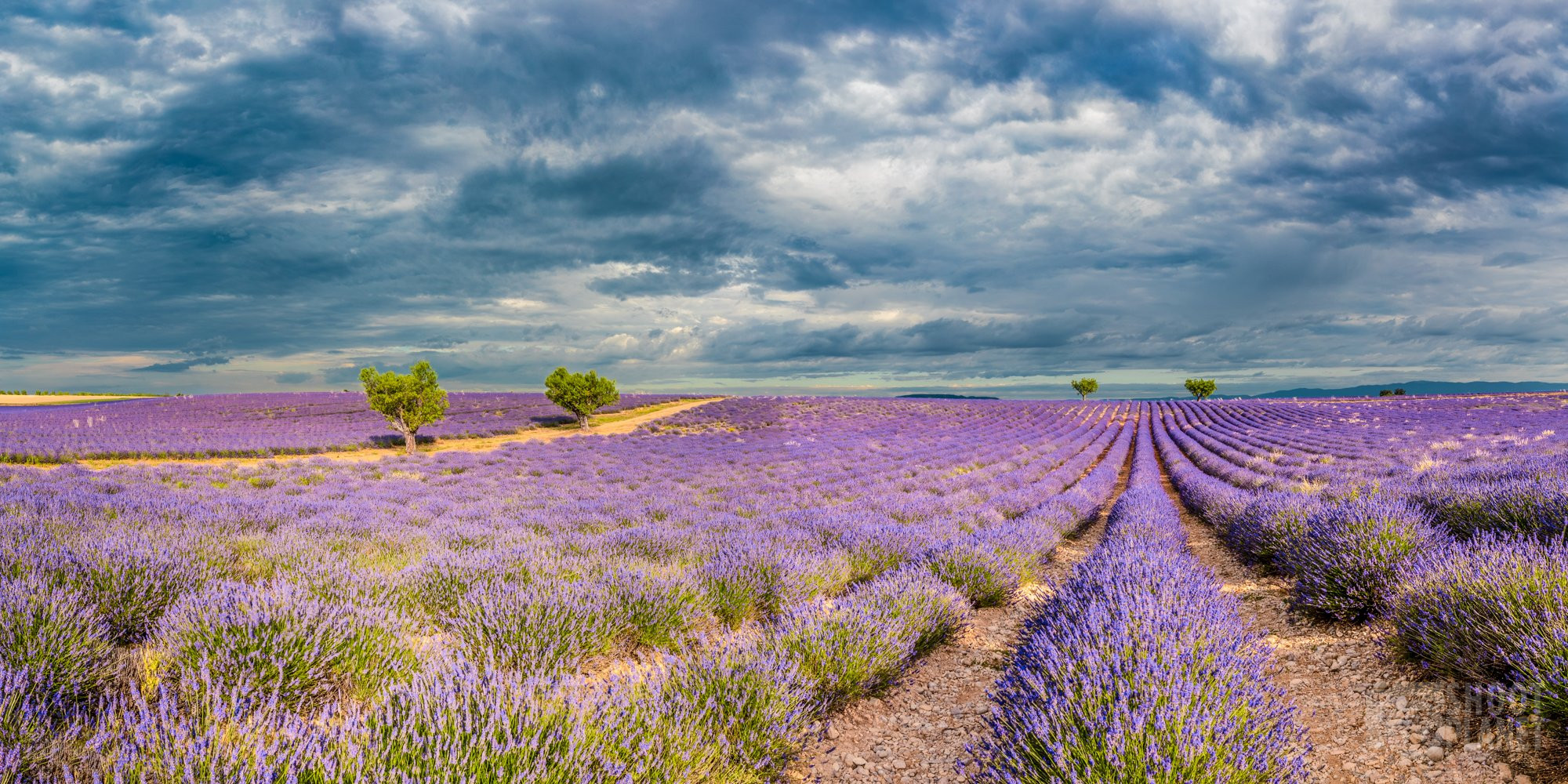 Valensole lavender field cloudy sunrise panorama, France