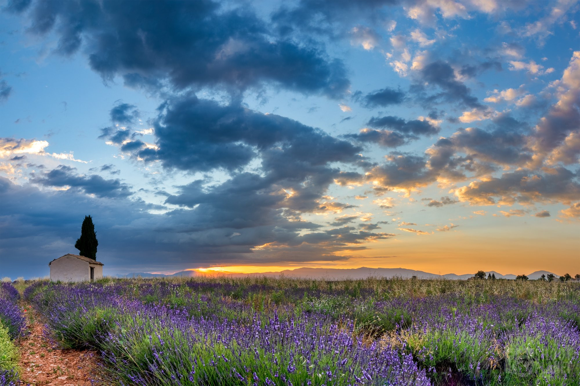 Valensole lavender field and house sunrise, France
