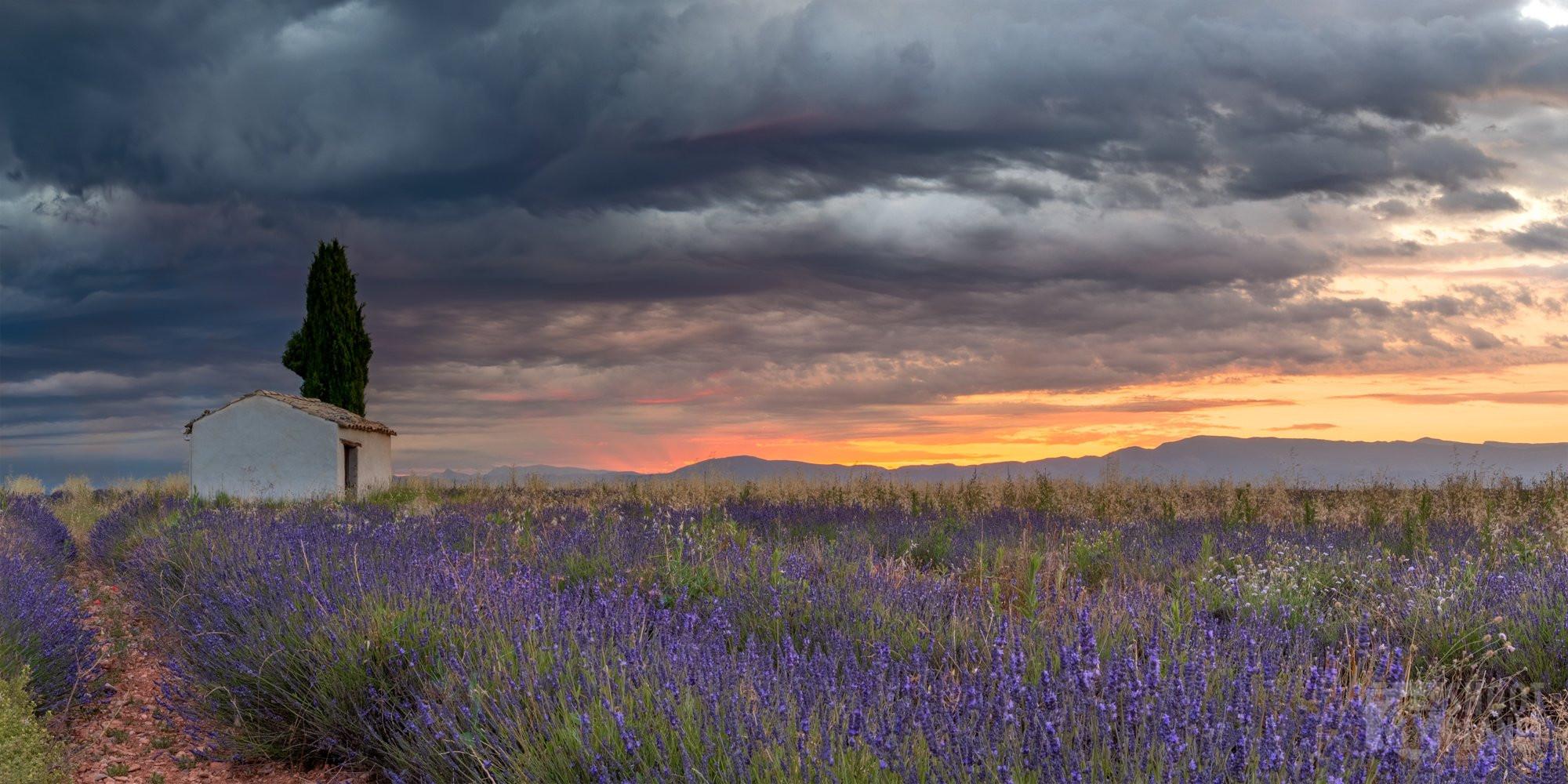 Valensole, lavenders sunrise, Haute-Provence France