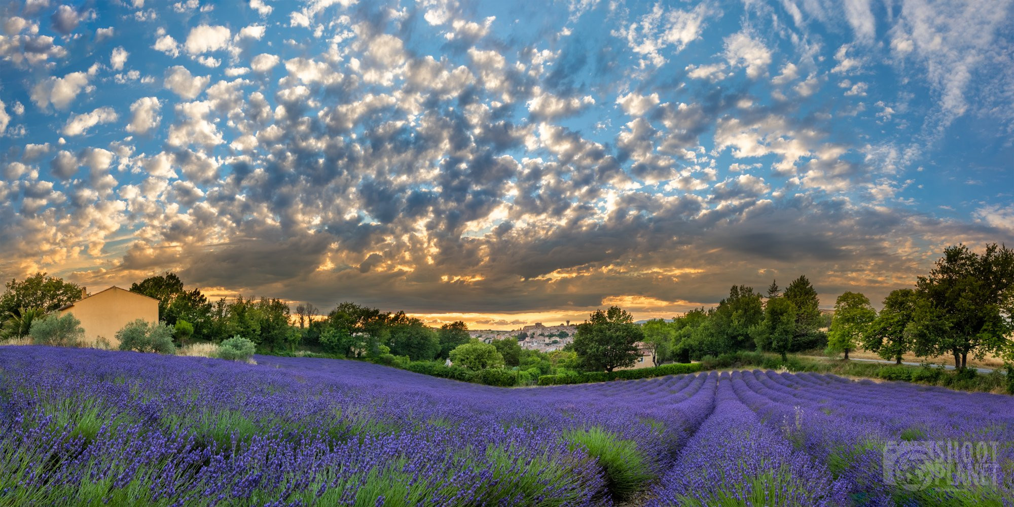 Valensole Provençal village lavenders fields sunrise, France