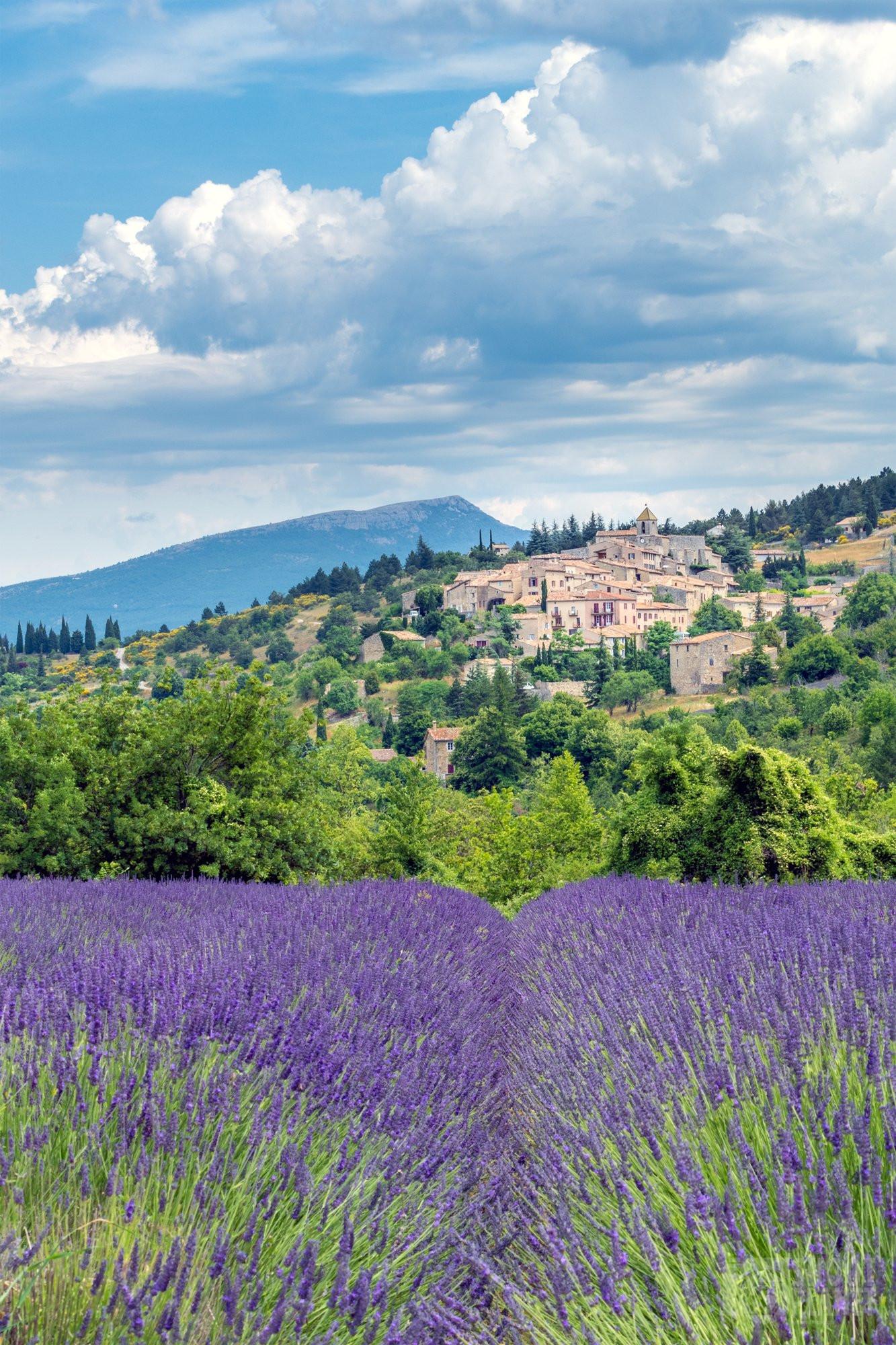 Aurel villlage lavender fields, Drome France