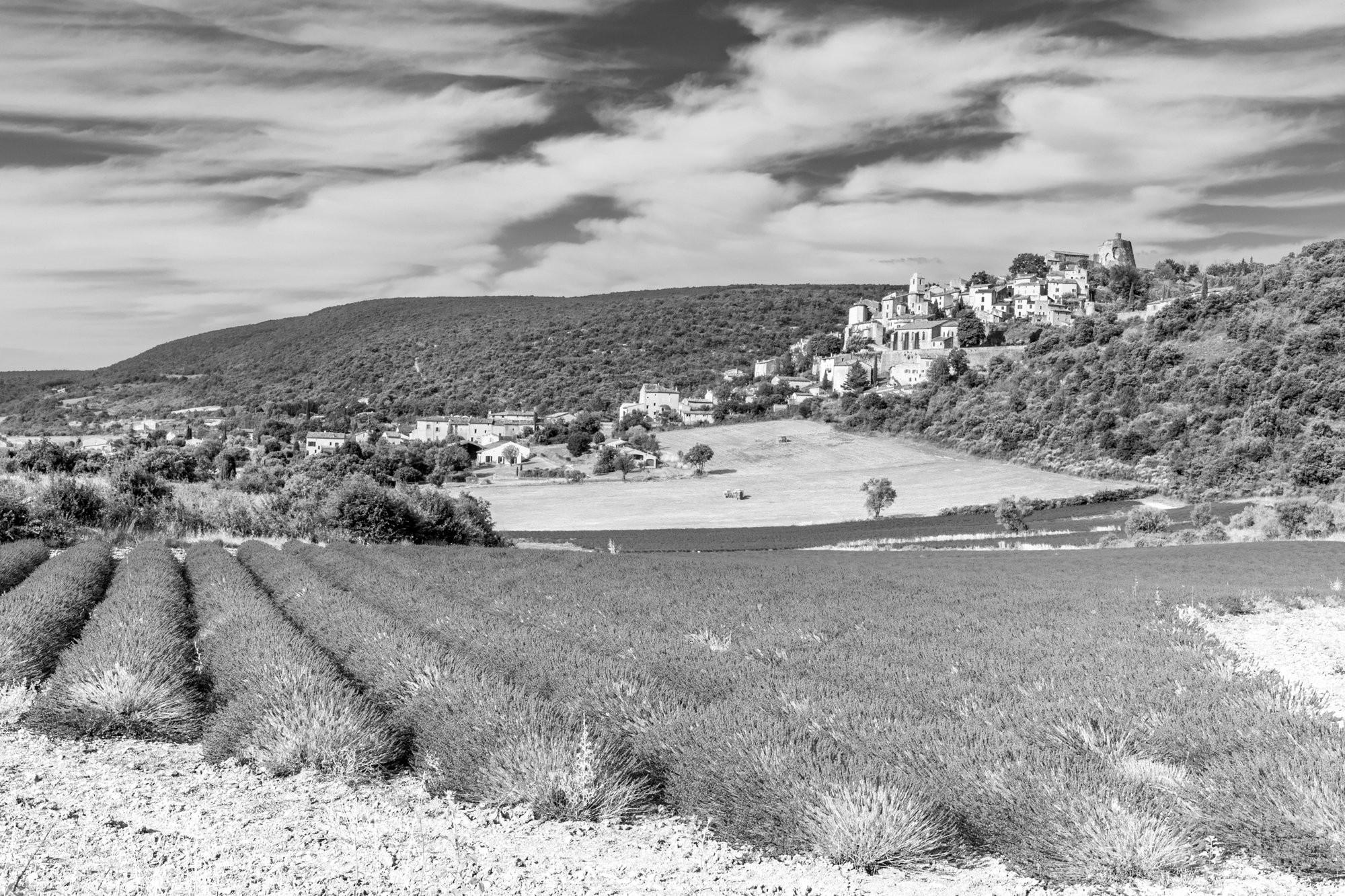 Simiane-la-Rotonde lavender fields, Vaucluse France