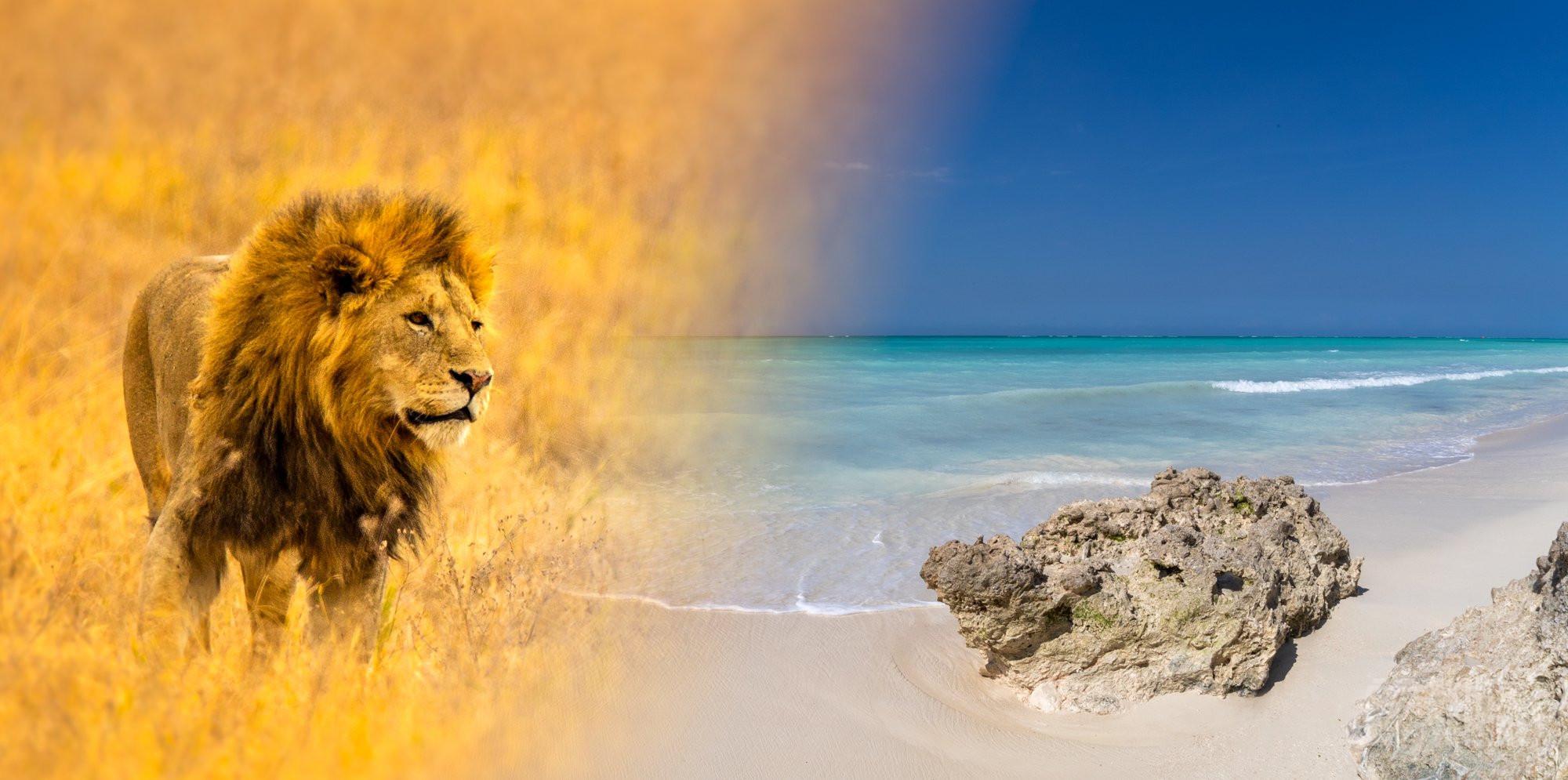 Ras Nungwi beach, and Lion collage, Tanzania