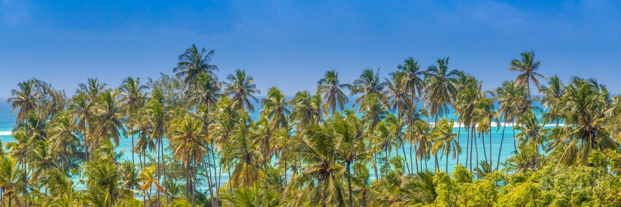 Matemwe beach coconut trees panorama Zanzibar Tanzania