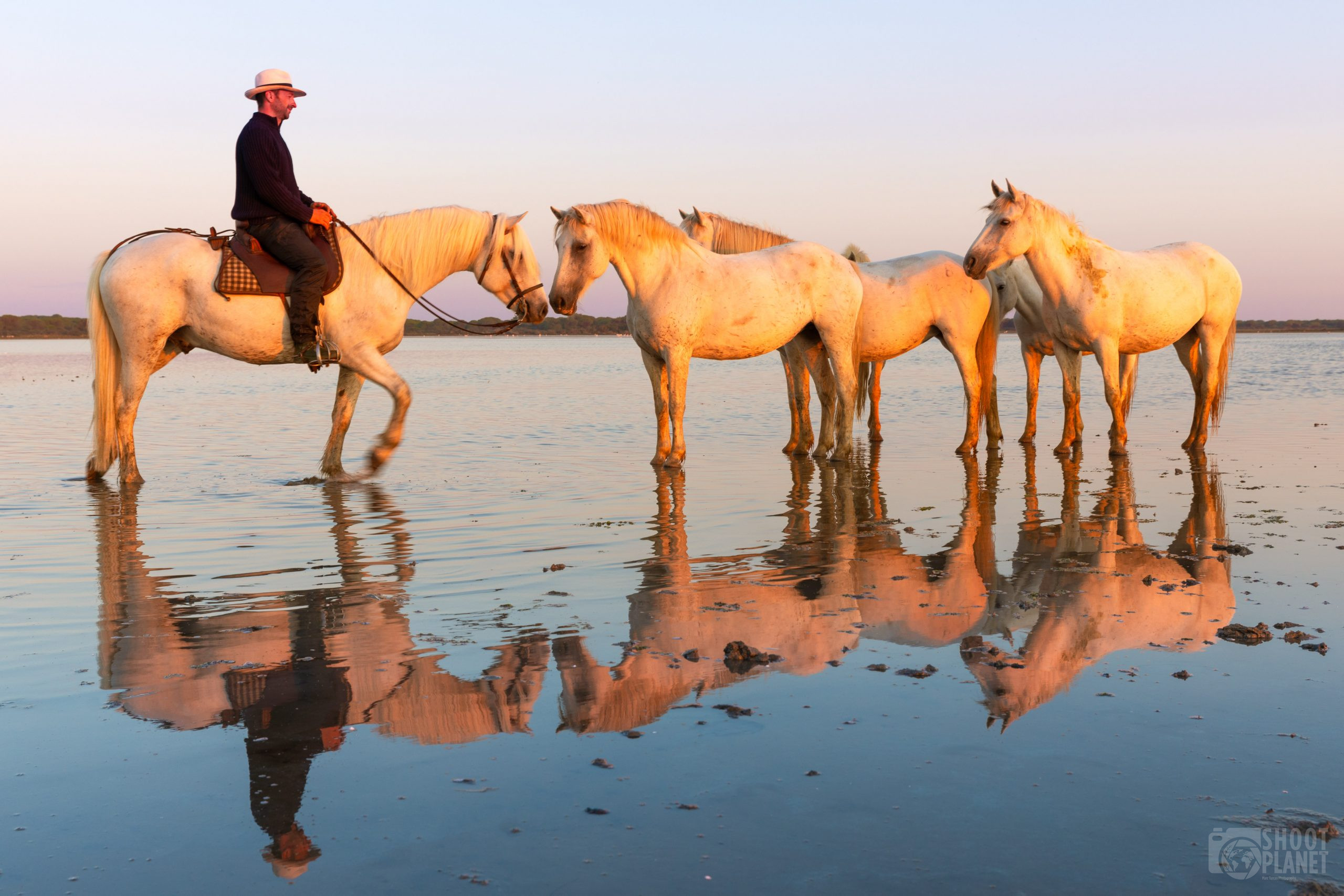 Horses and guardian on a Camargue beach, France