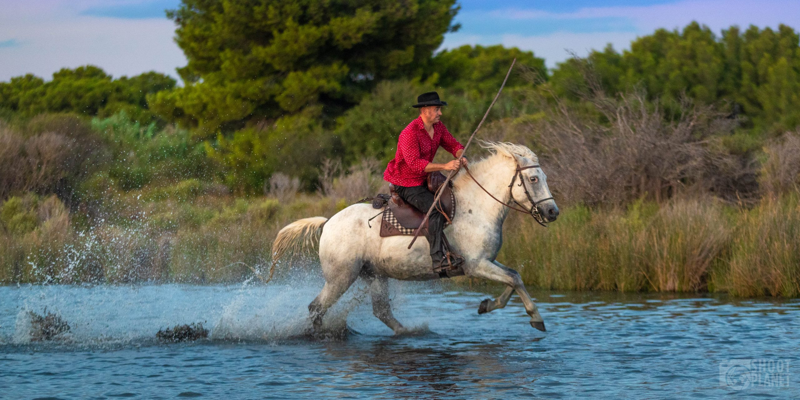 Cowboy and horse in a Camargue Pond, France
