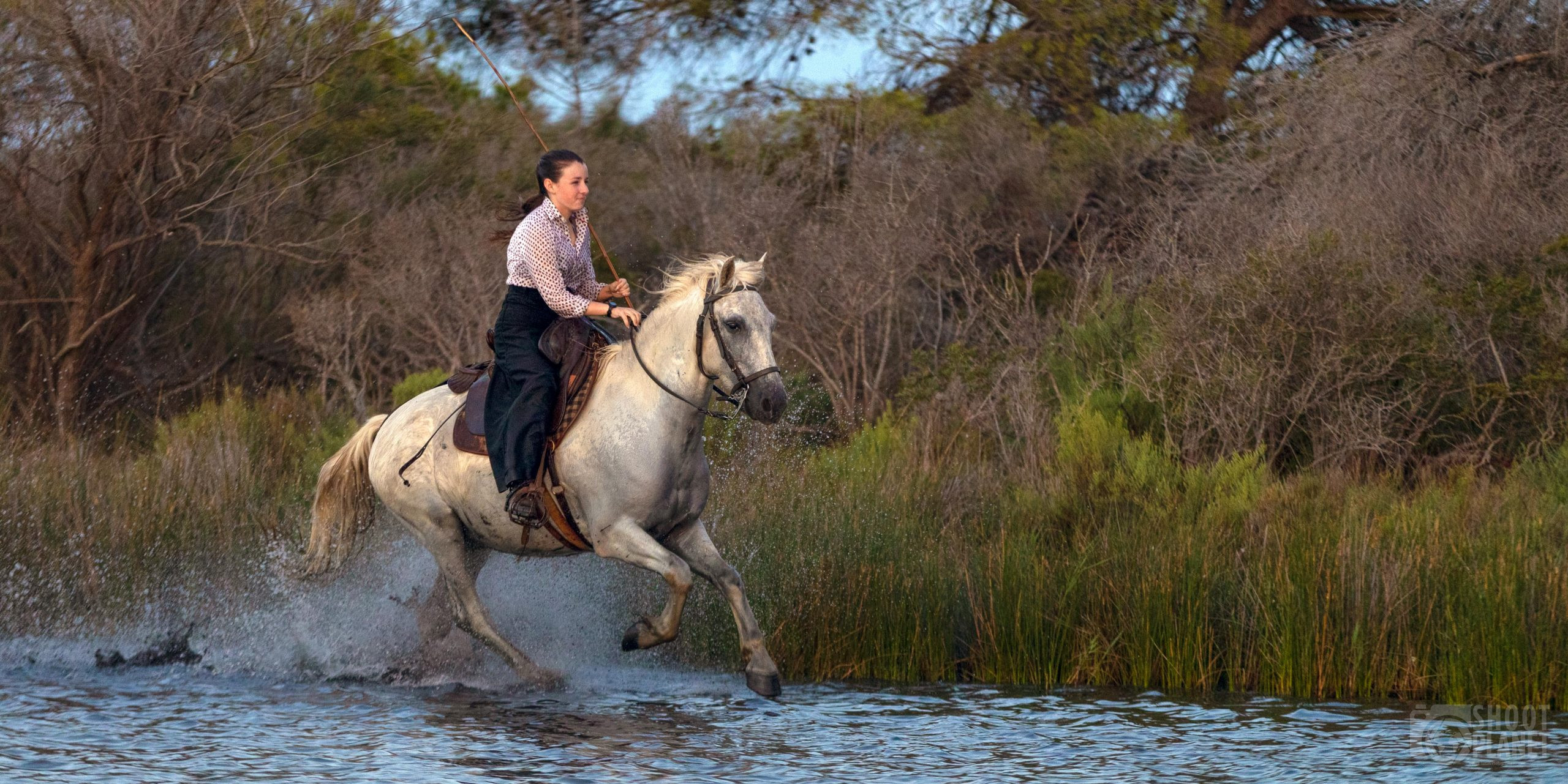 Cowgirl and horse in a Camargue Pond, France