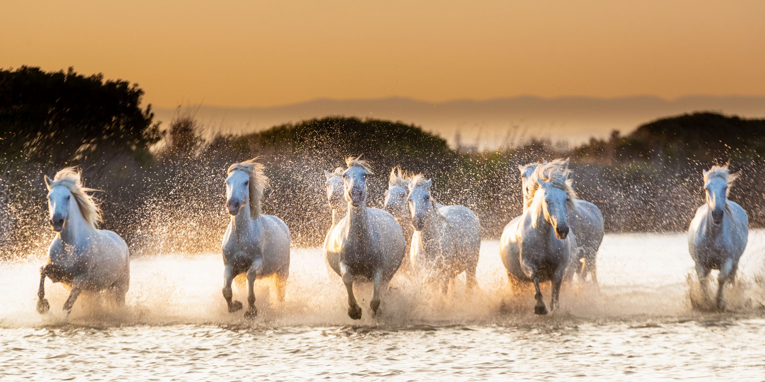 Horses light in a Camargue Pond, France