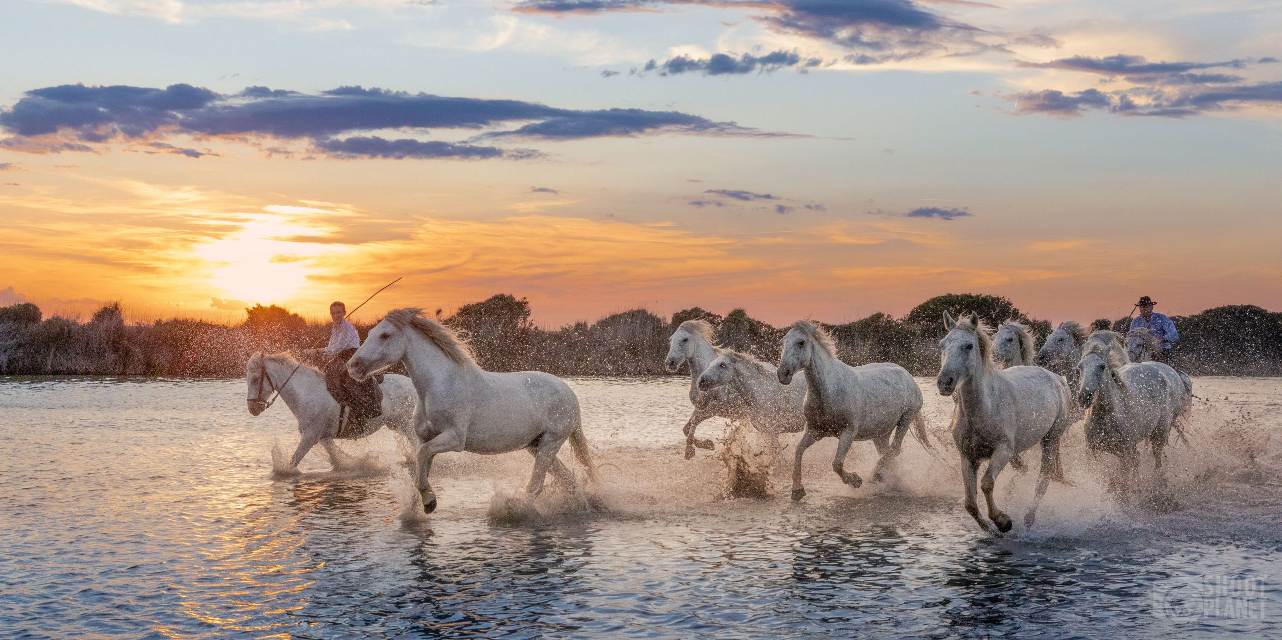 Horses sunset in a Camargue Pond, France